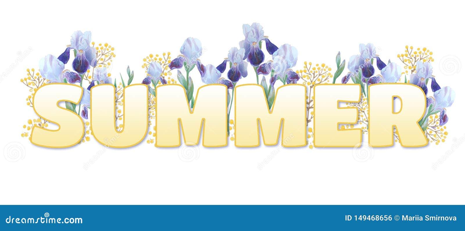 词'夏天' 在白色背景的黄色梯度题字 明亮的虹膜和黄色小树枝