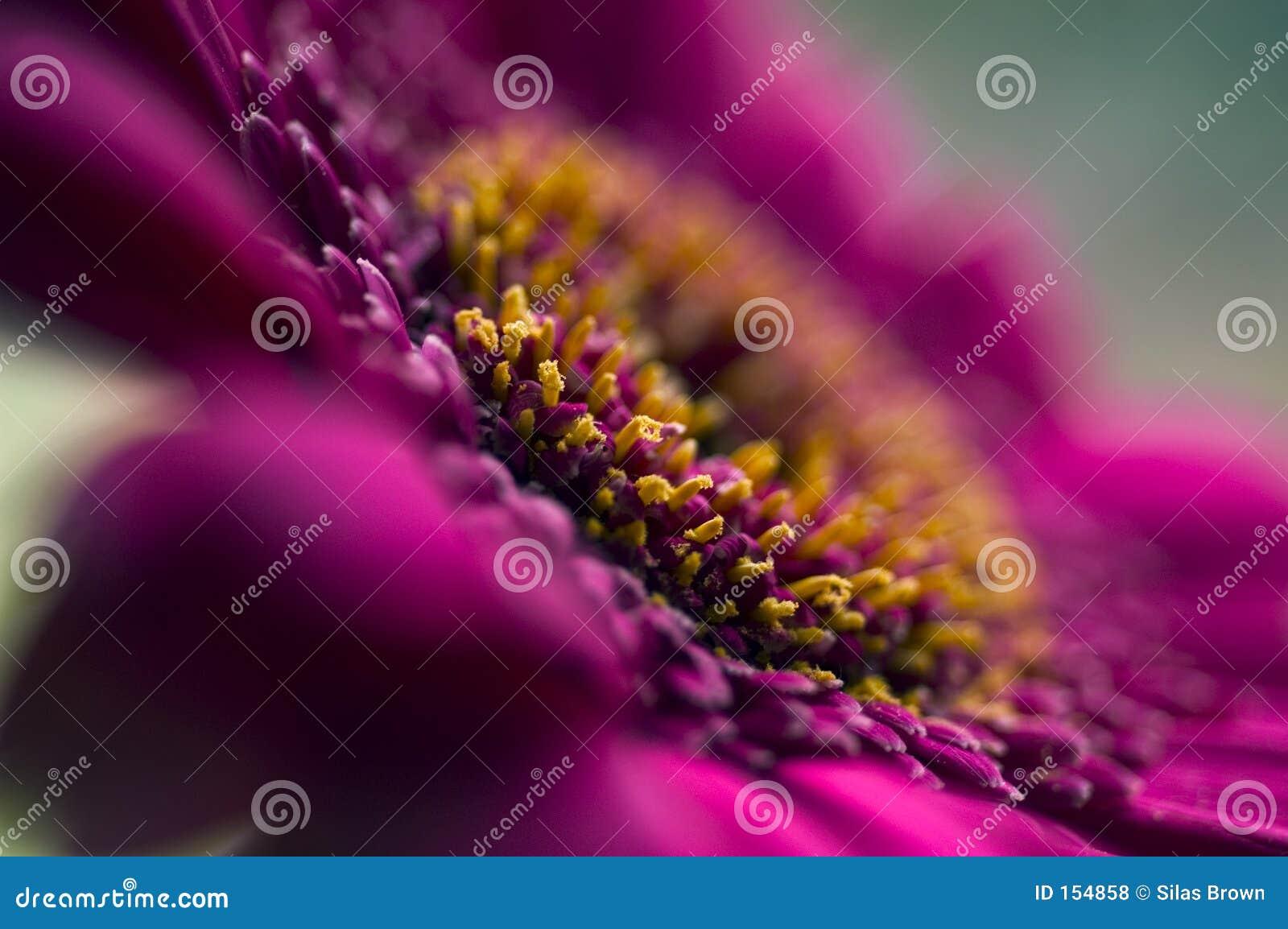 详细资料花紫色