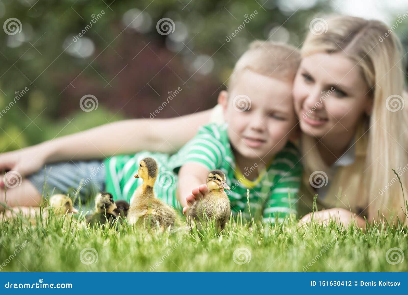 说谎在草和看起来小的鸭子步行的母亲和儿子