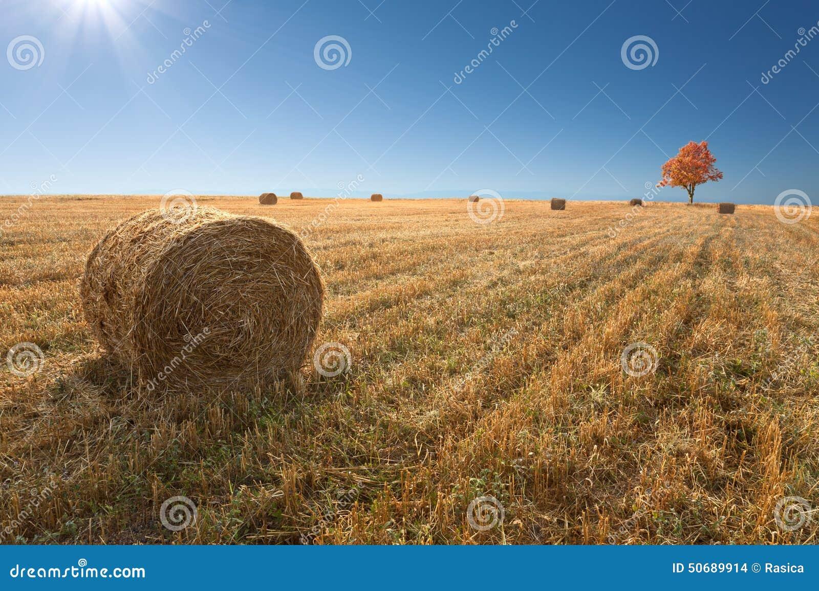 Download 调遣与干草堆在麦子以后收获 库存照片. 图片 包括有 横向, 照亮, 庄稼, 工厂, 圈子, 农场, 结算 - 50689914