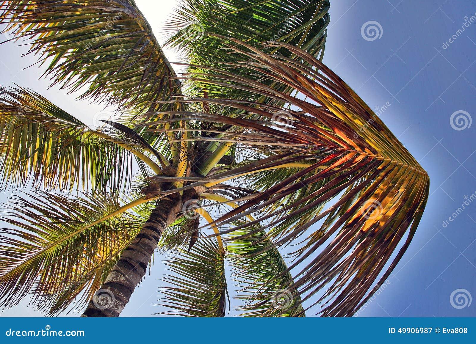 说谎在棕榈下