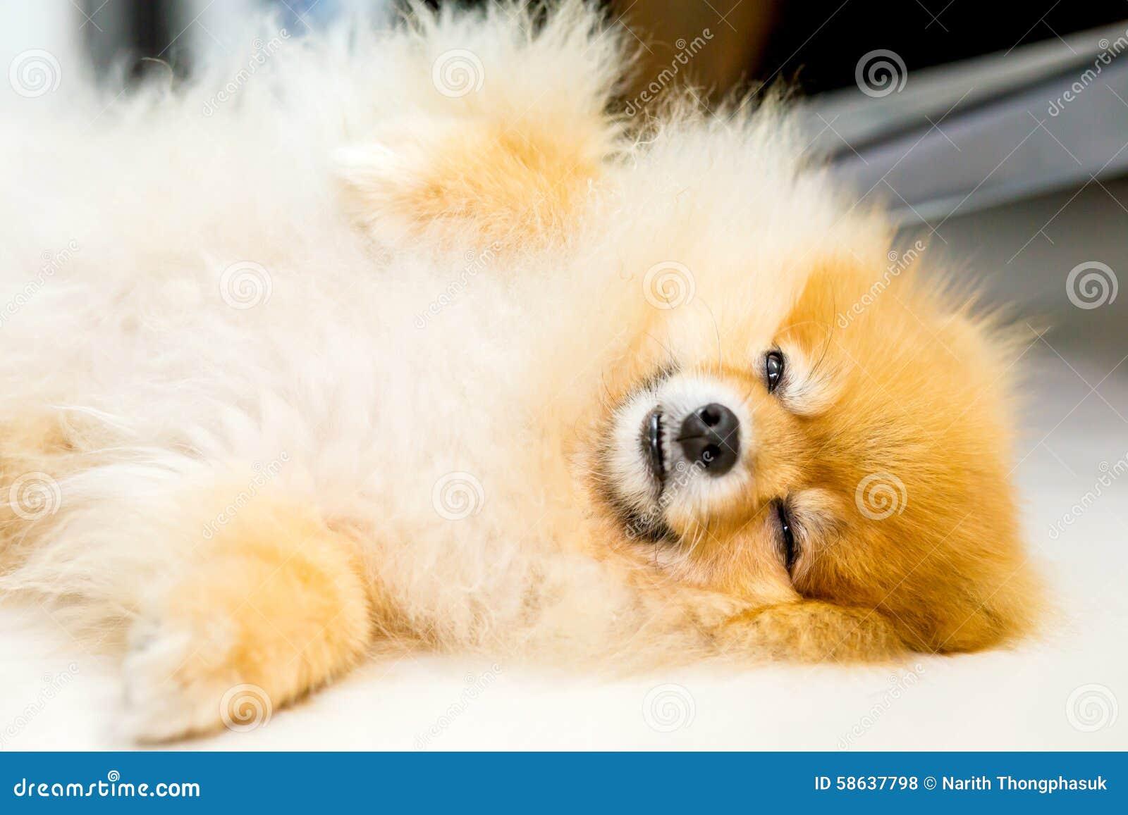 说谎在白色地板上的狗