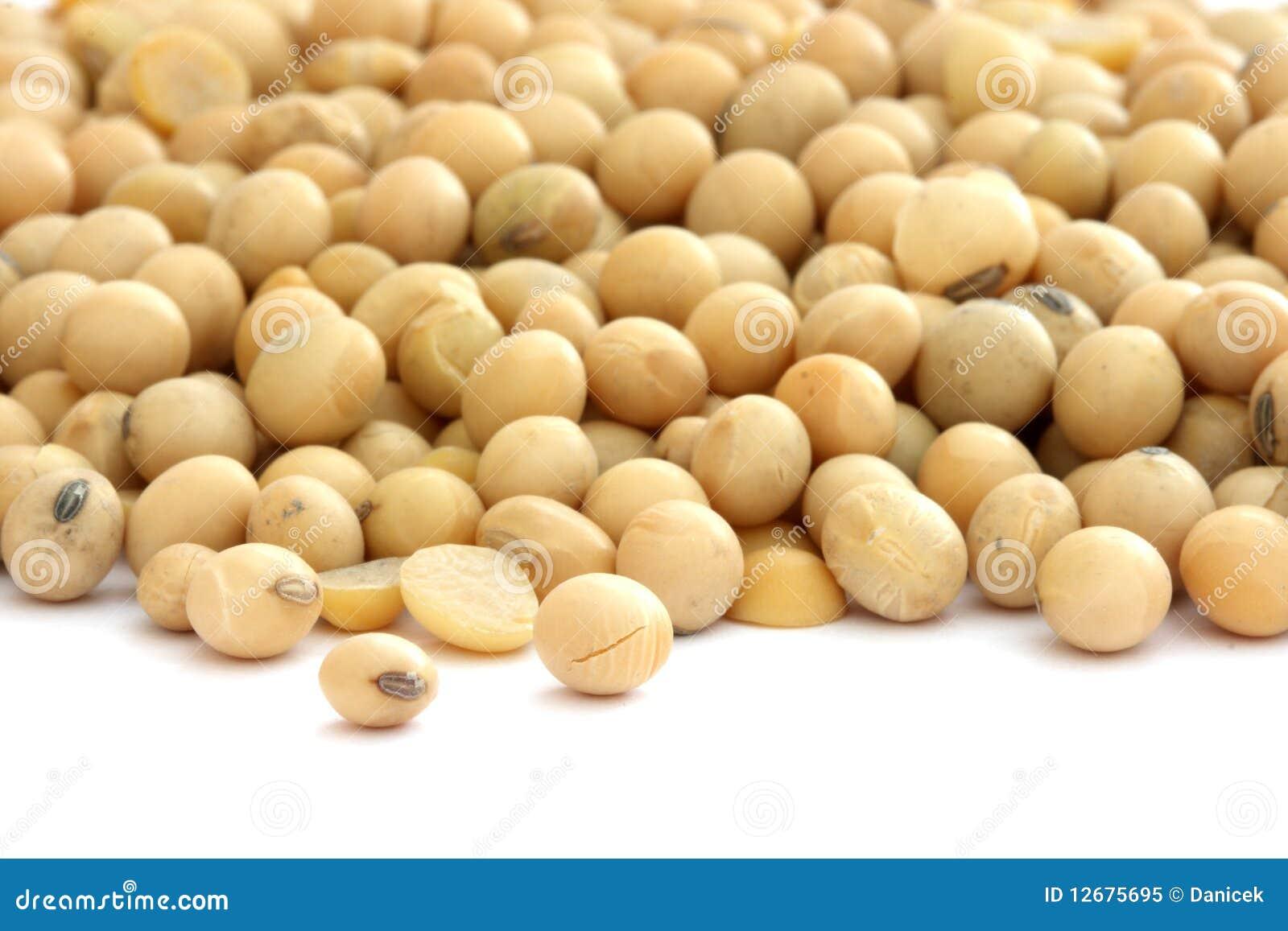 豆大豆白色