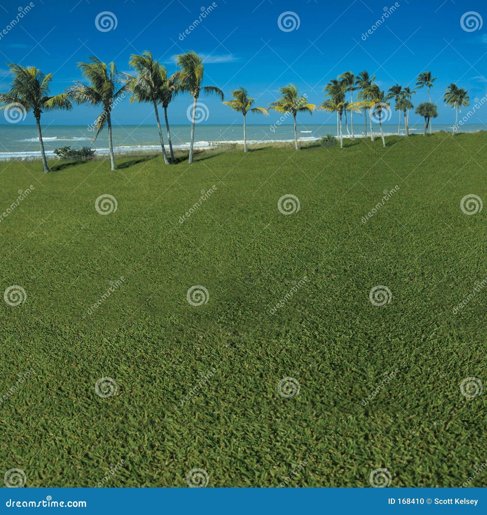 象草的海景