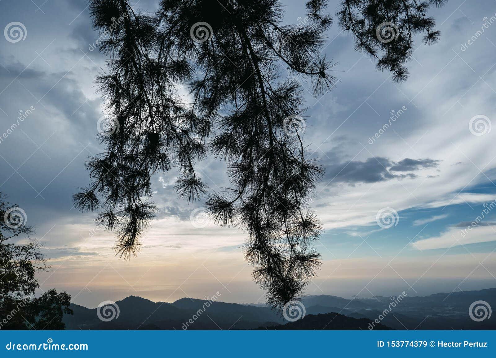 豪华的山岭地区,被盖的雾,热带的密林壮观的风景