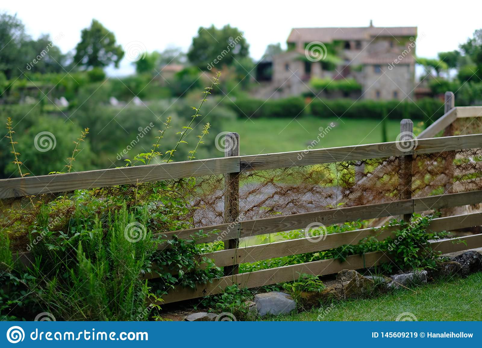 豪华的绿色篱芭在托斯卡纳