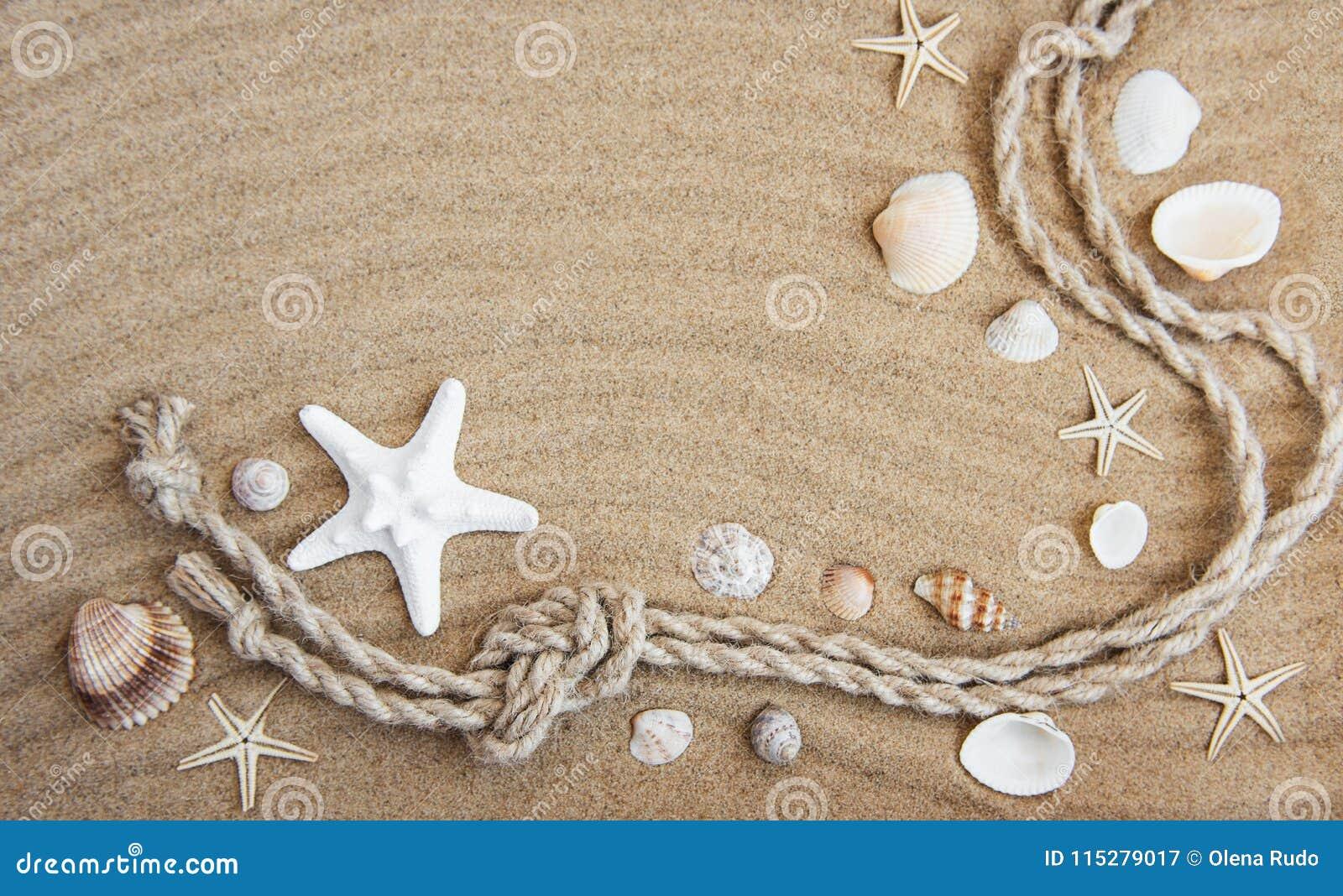 贝壳和海装饰与绳索