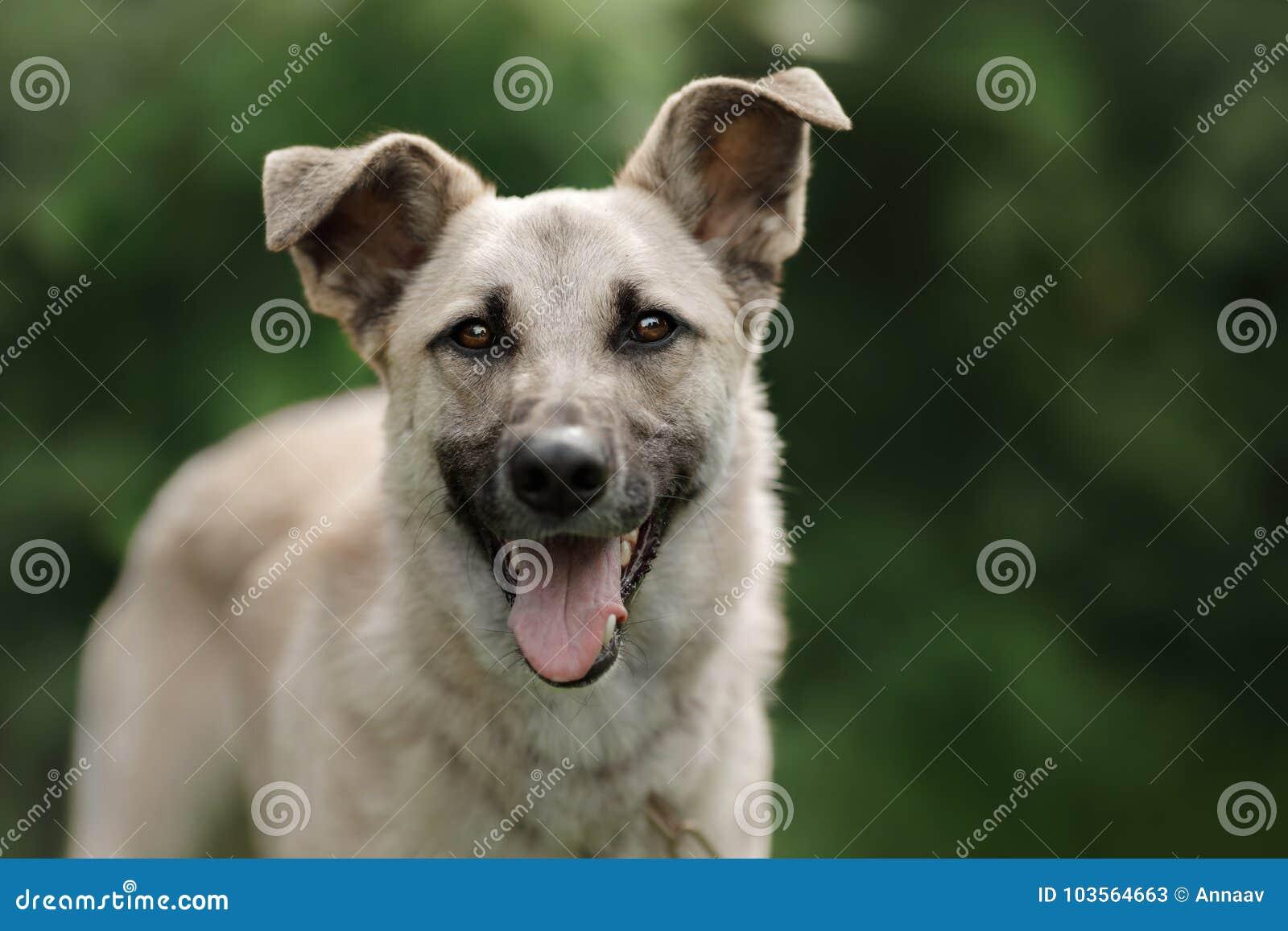狗的种类傹.���/_走在自然的狗品种