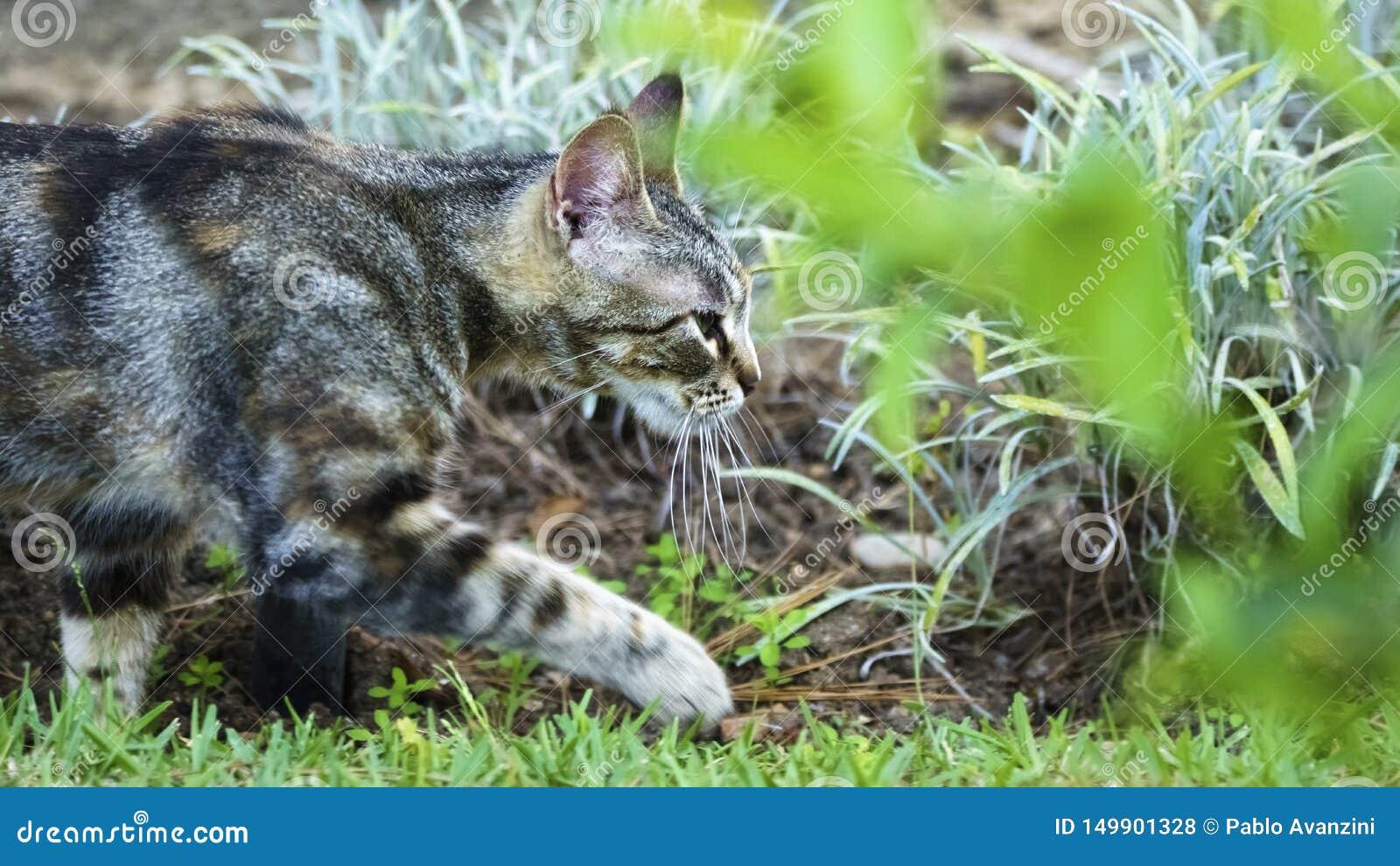 走在草的野猫