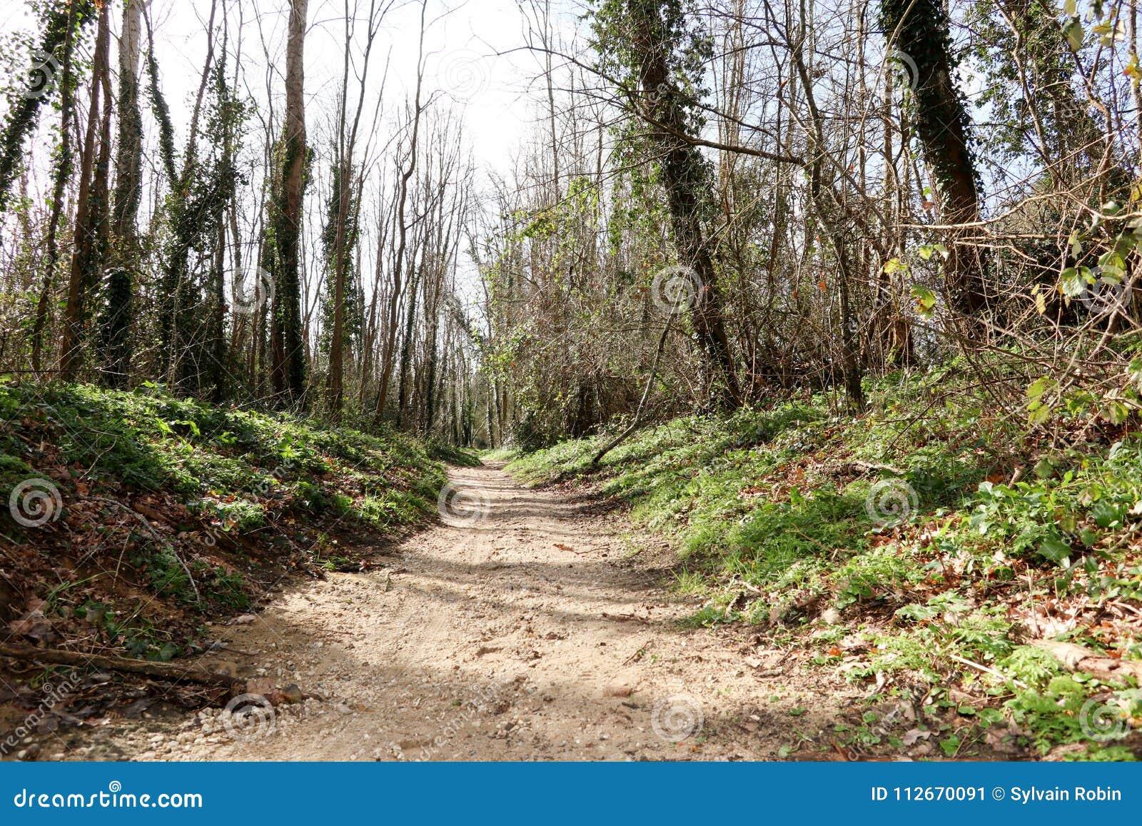 走道有绿色树的车道道路用森林美好的胡同方式