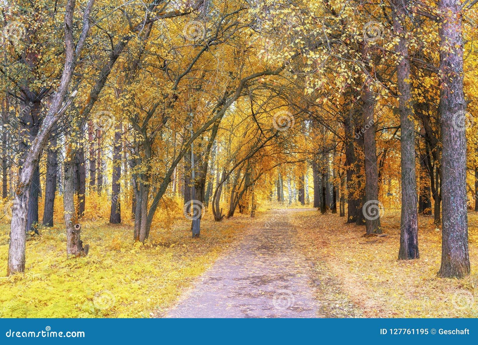 走道车道通过美丽的秋天森林在公园