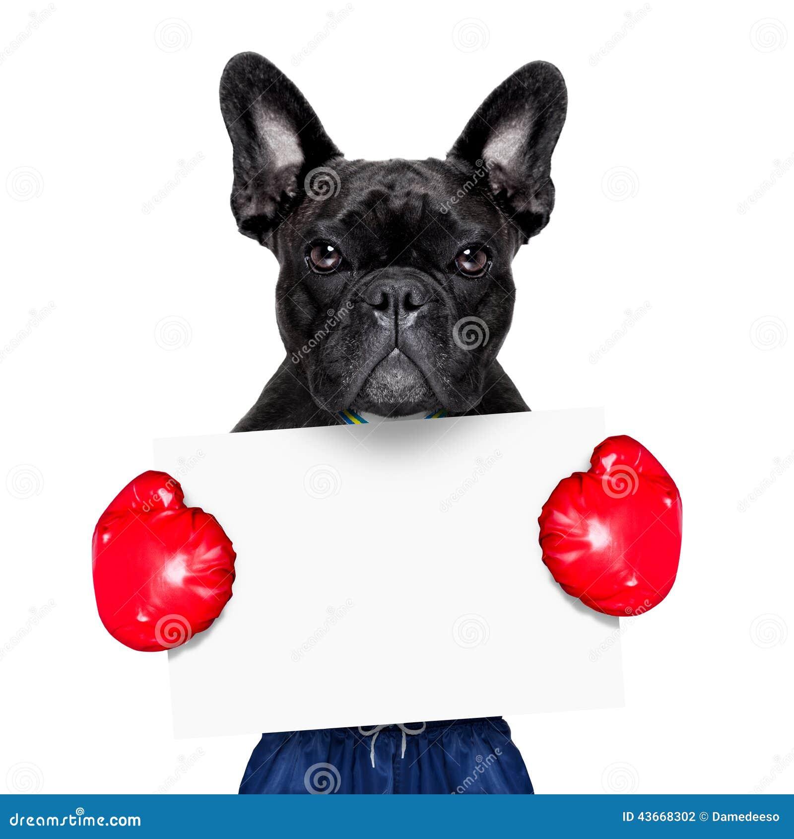 活跃体育狗