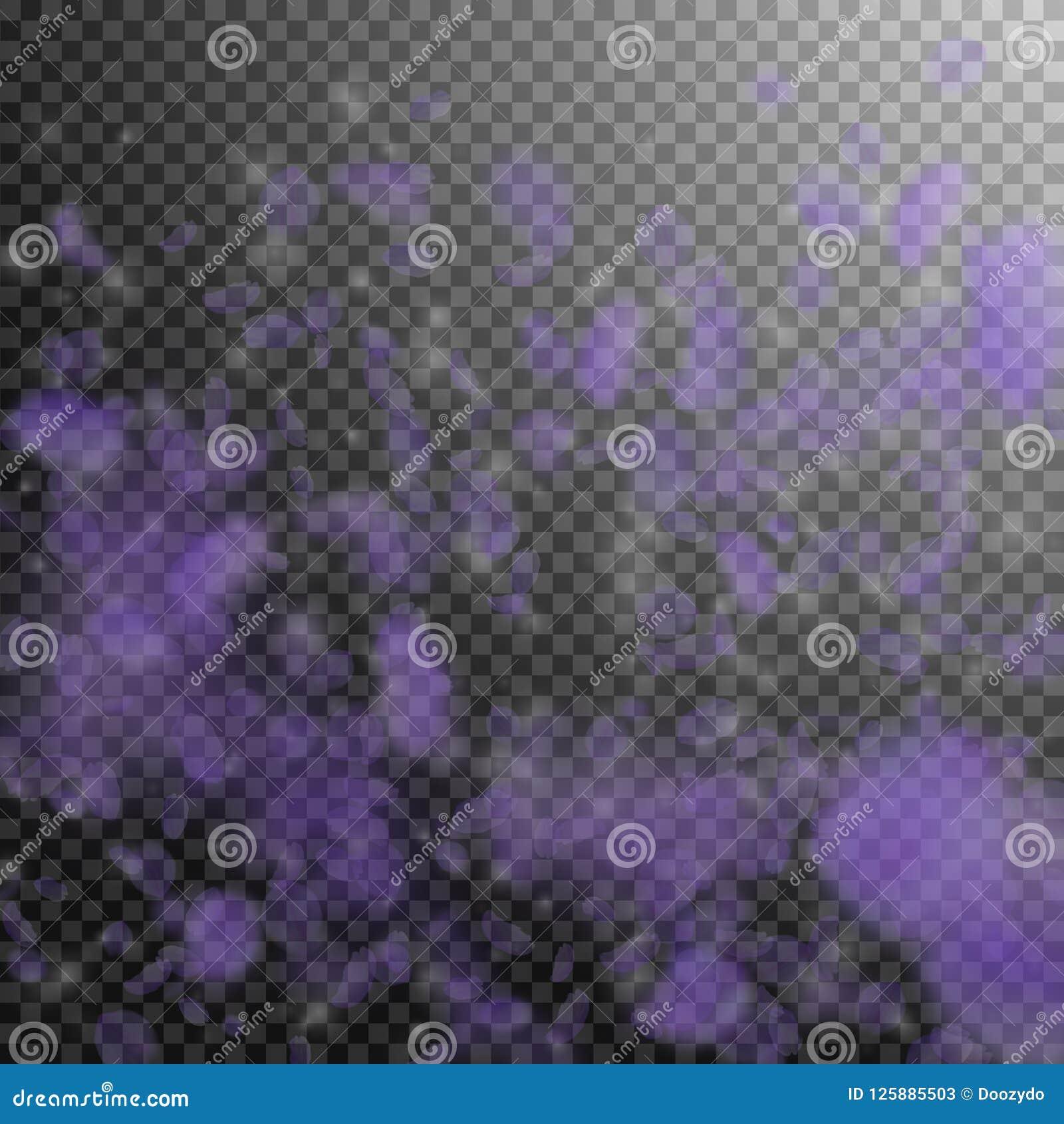 跌倒紫罗兰色花的瓣 不可磨灭的浪漫花梯度 在透明的飞行瓣