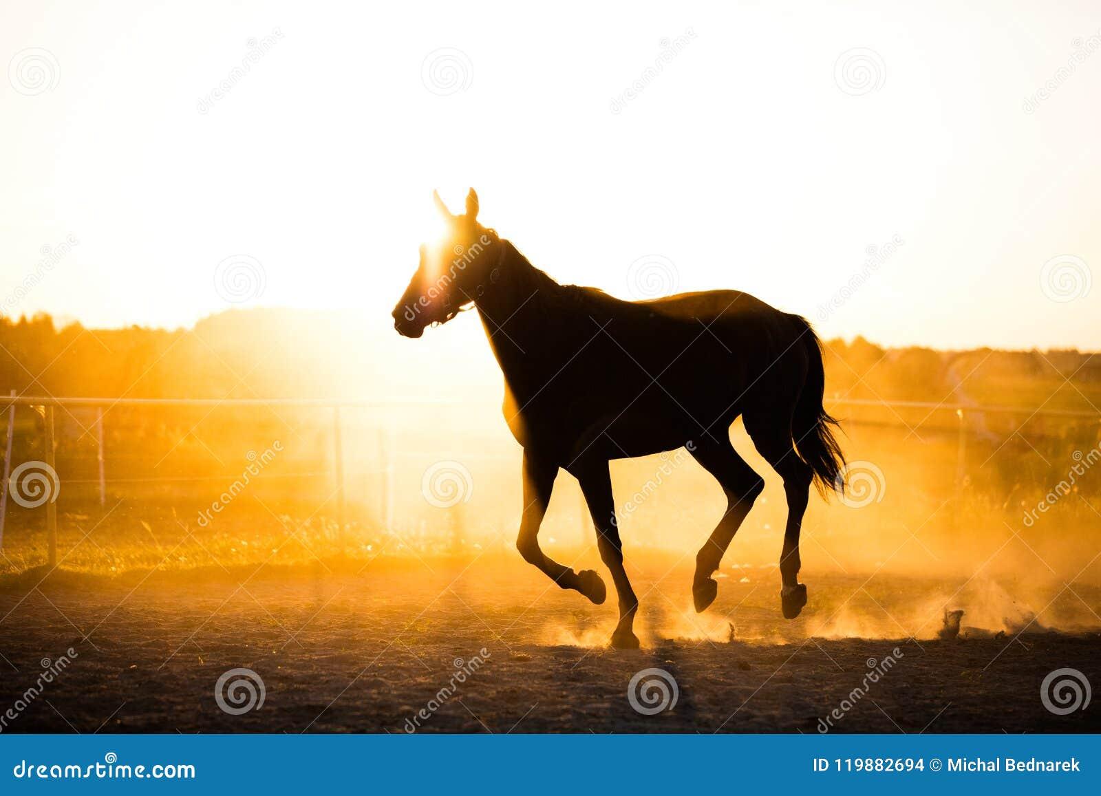 跑在日落的小牧场的黑马