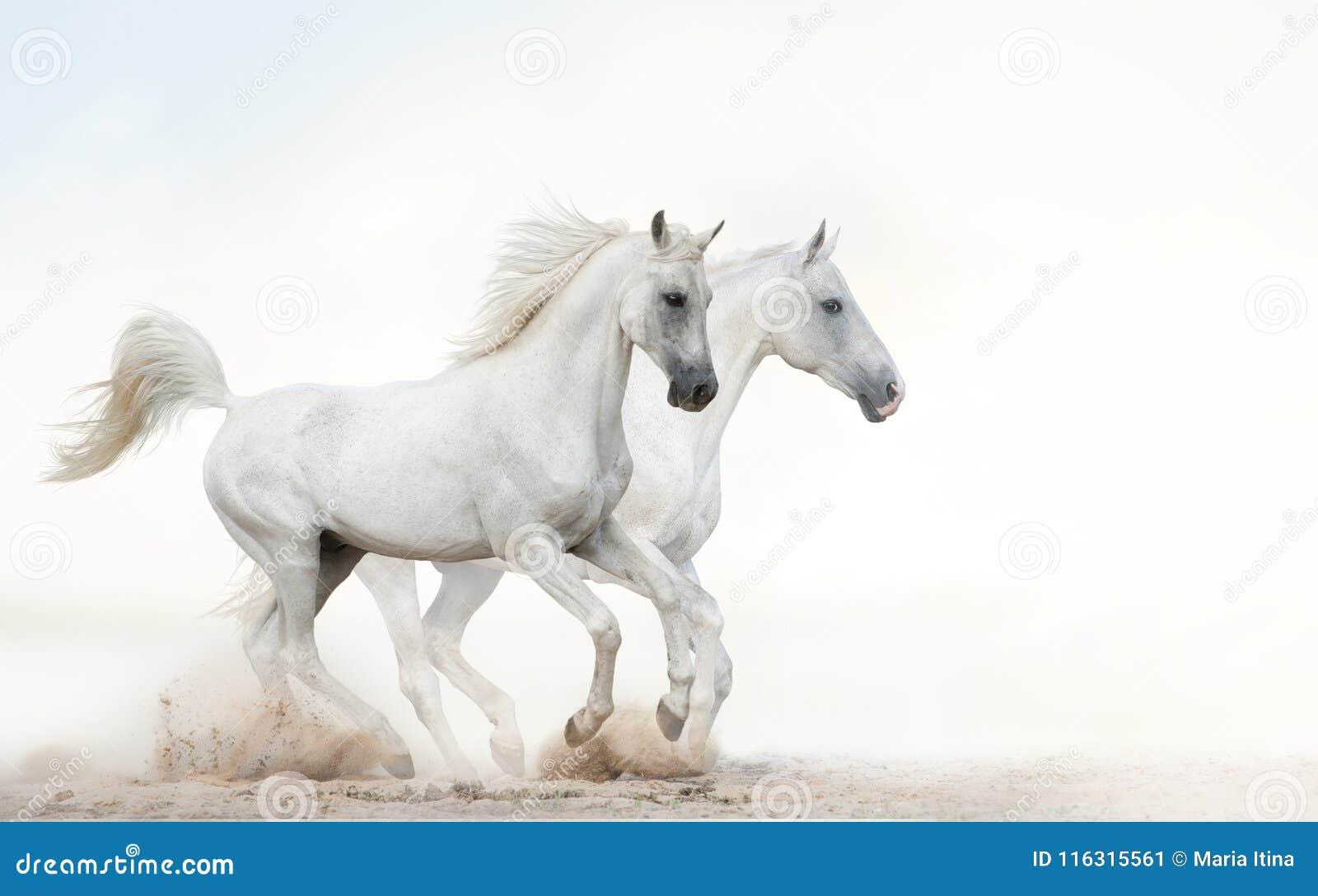 跑疾驰的白色公马