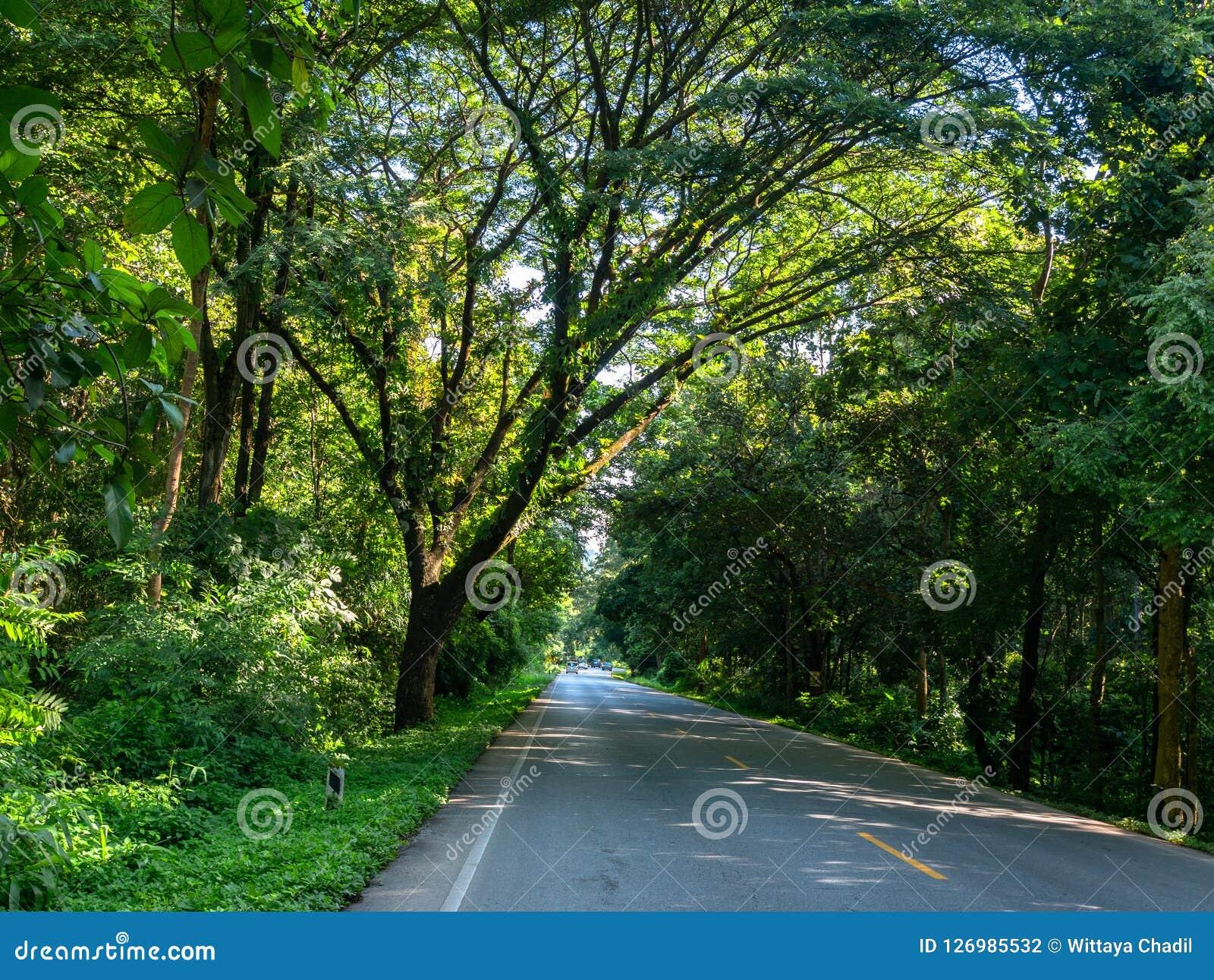 路在热带乡下, Rainny季节在CAsia