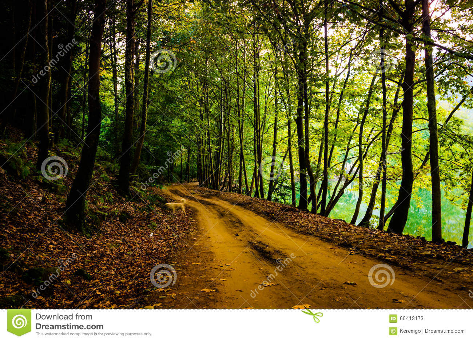 路径穿过森林