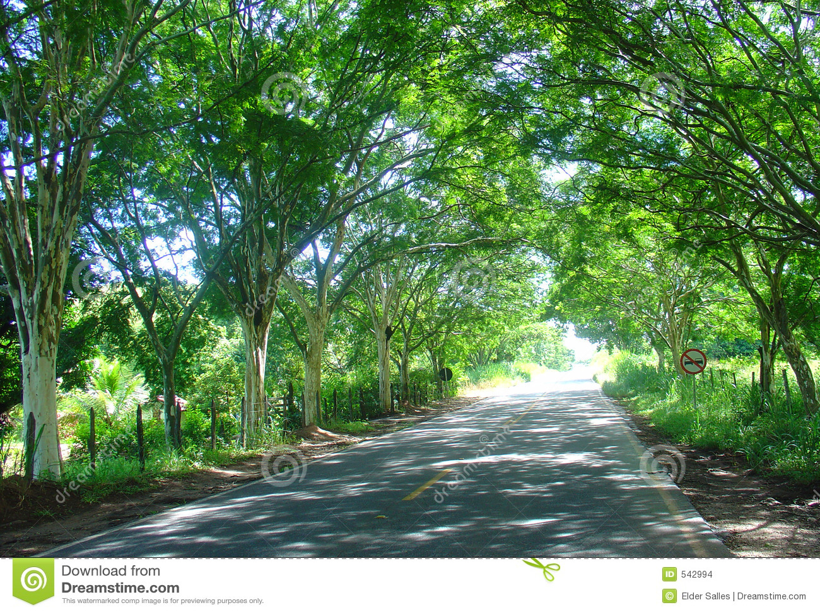 Download 路径路结构树 库存照片. 图片 包括有 幻想, 对称, brander, 森林, 节假日, 和平, 业务量, 生态系 - 542994