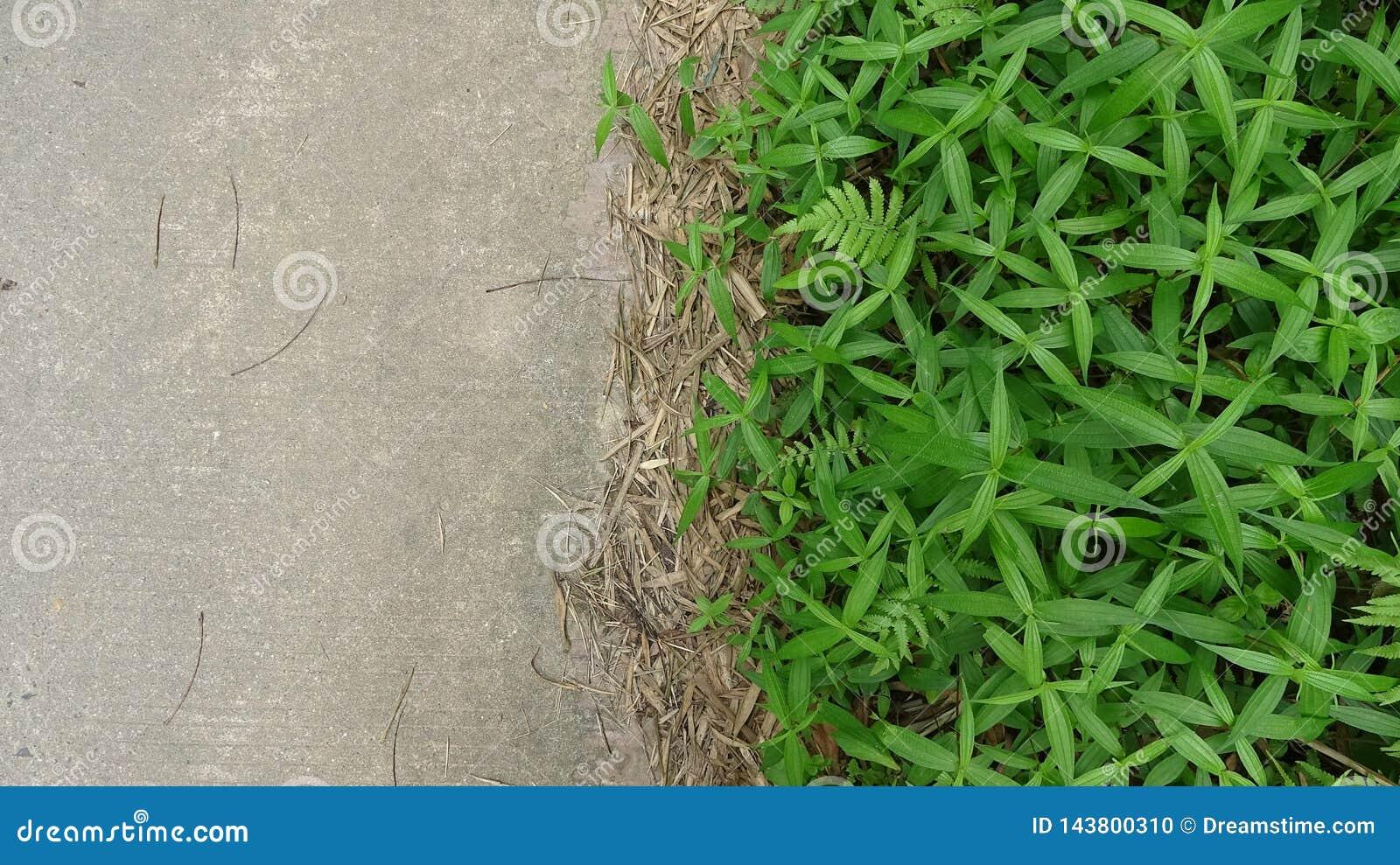 路旁杂草和水泥路形成一个鲜明对比