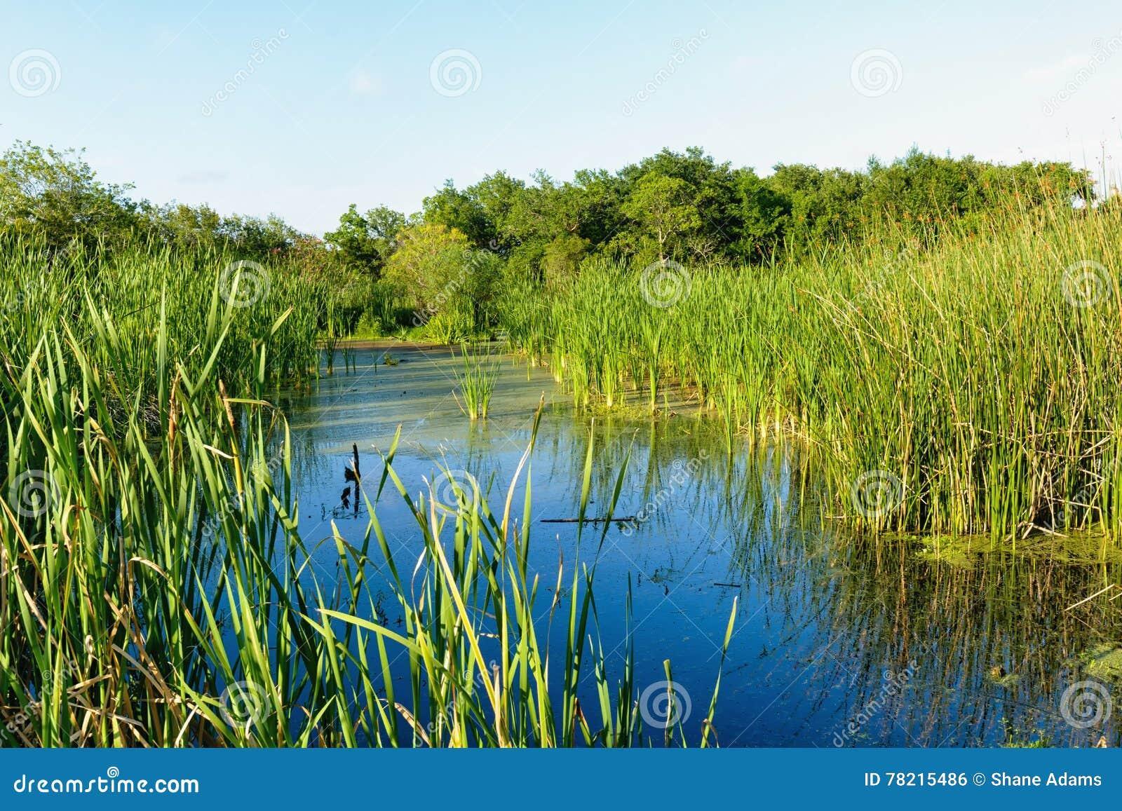 路易斯安那沼泽