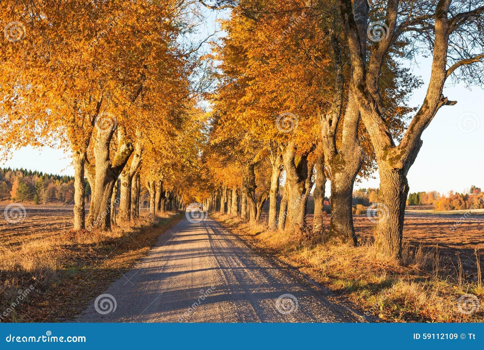 路标示用树在秋天
