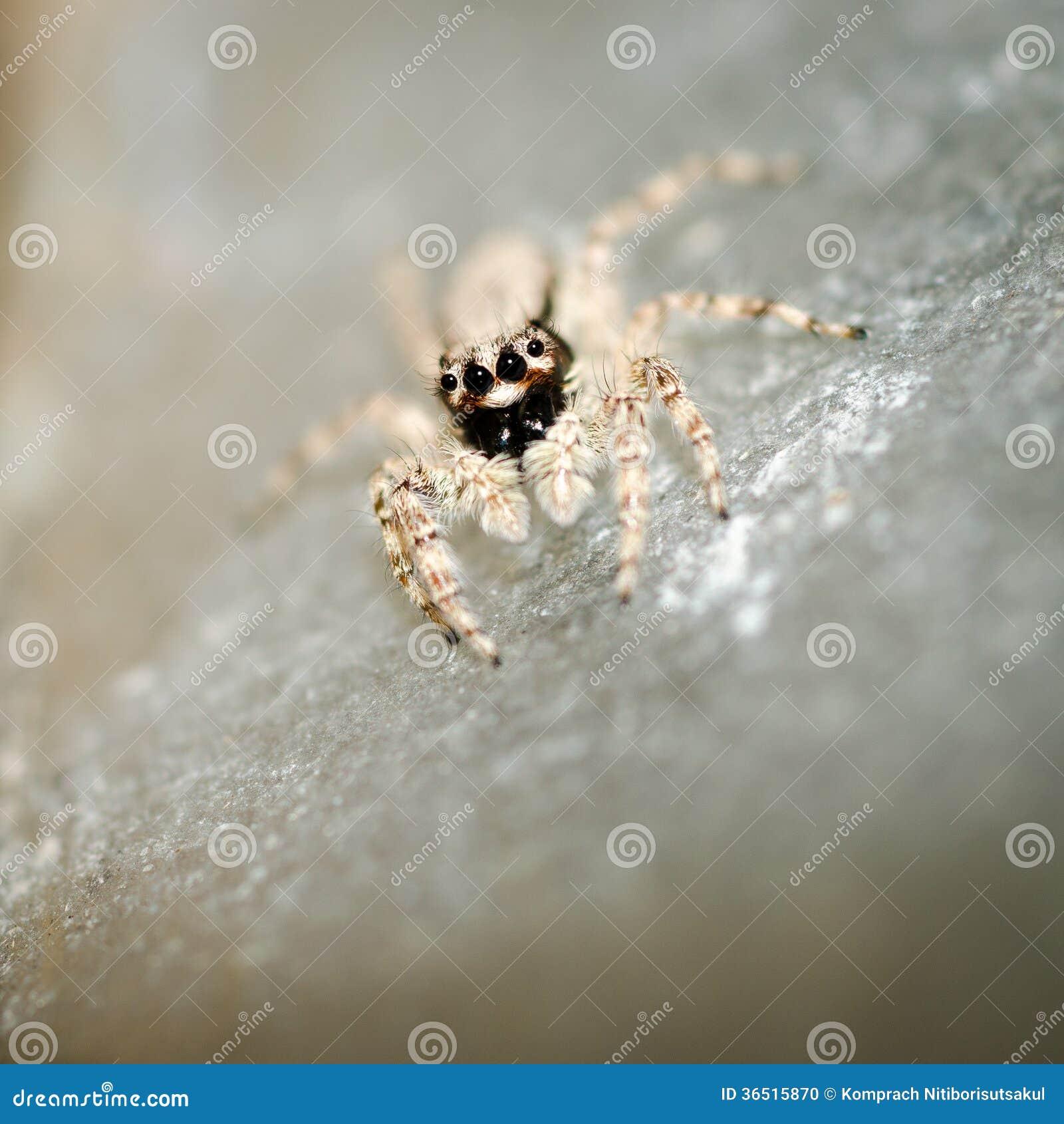 跳跃的蜘蛛。