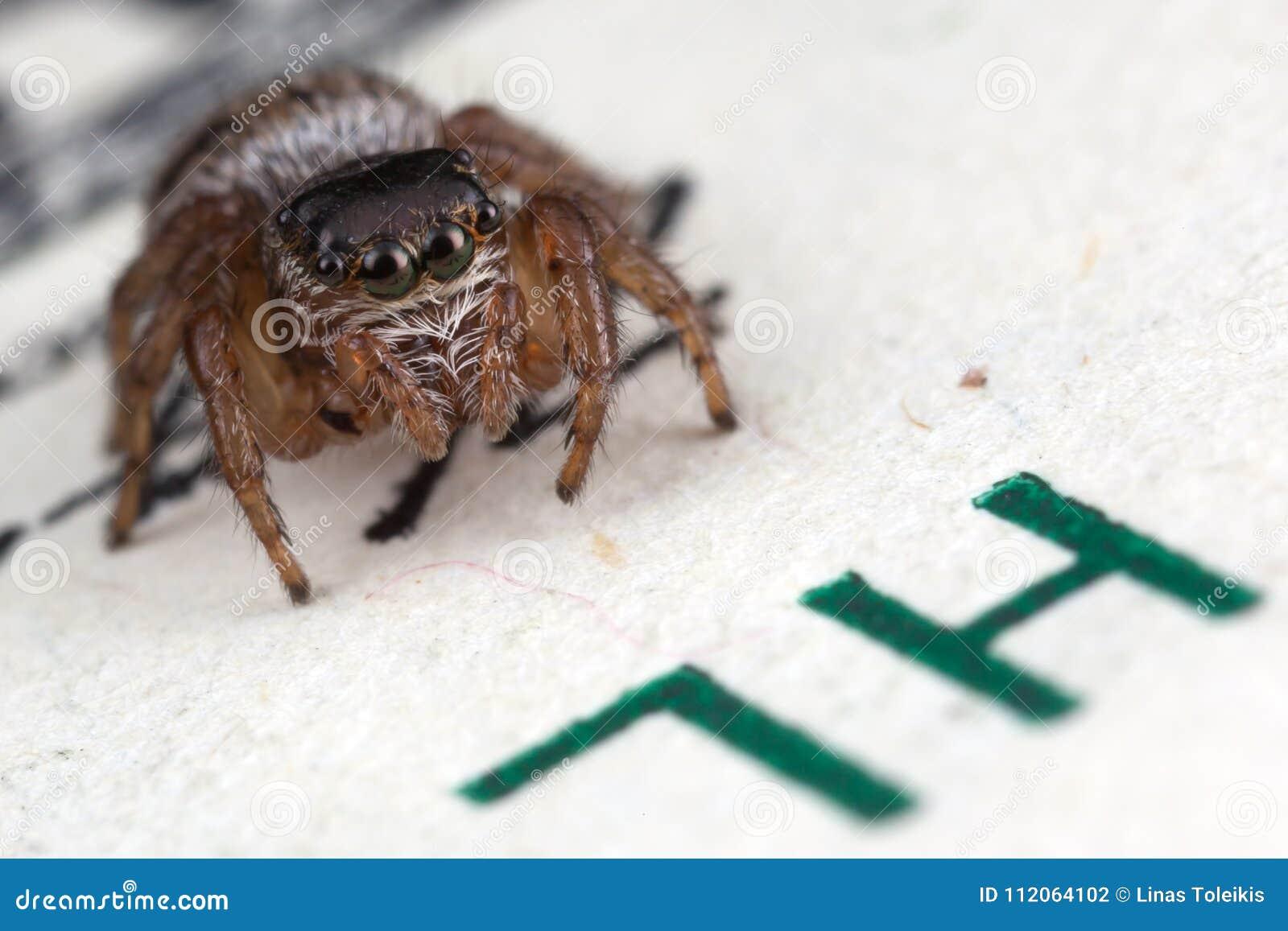 跳跃的蜘蛛和一百美元