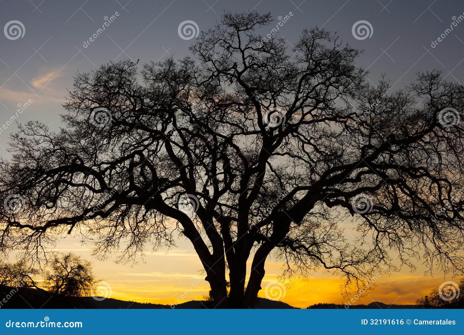 跳跃的青蛙树免版税库存图片 32191616