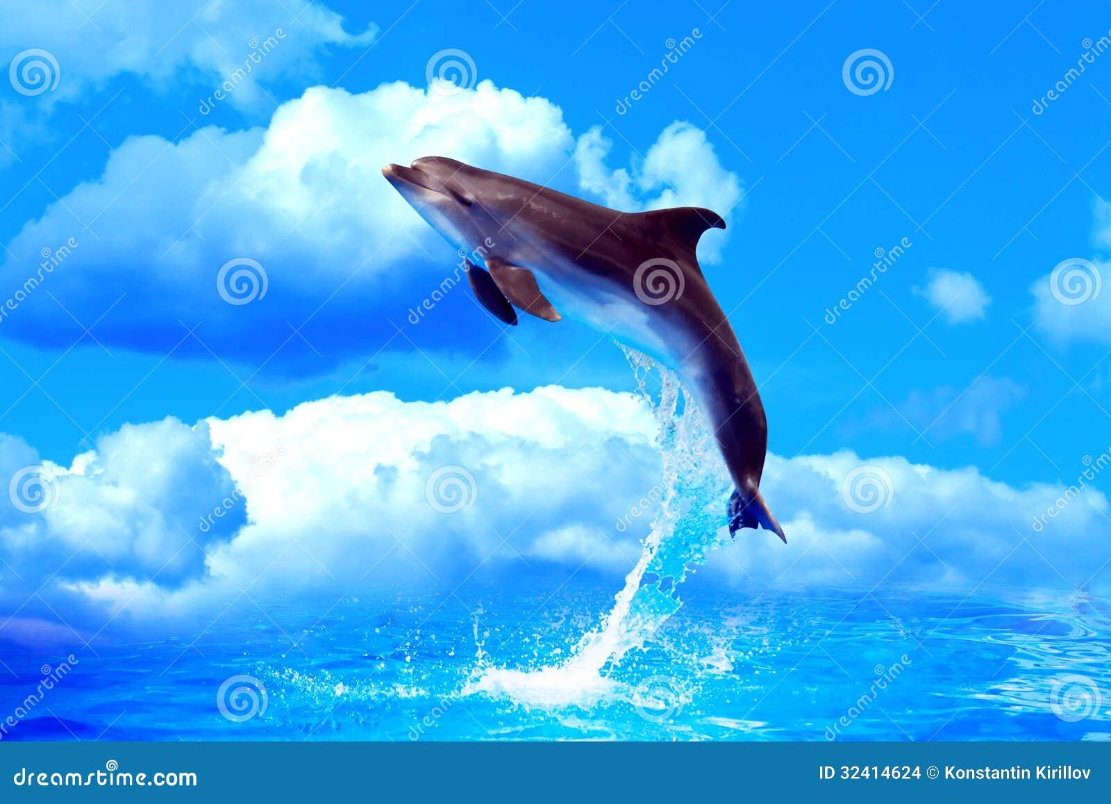 跳高的海豚