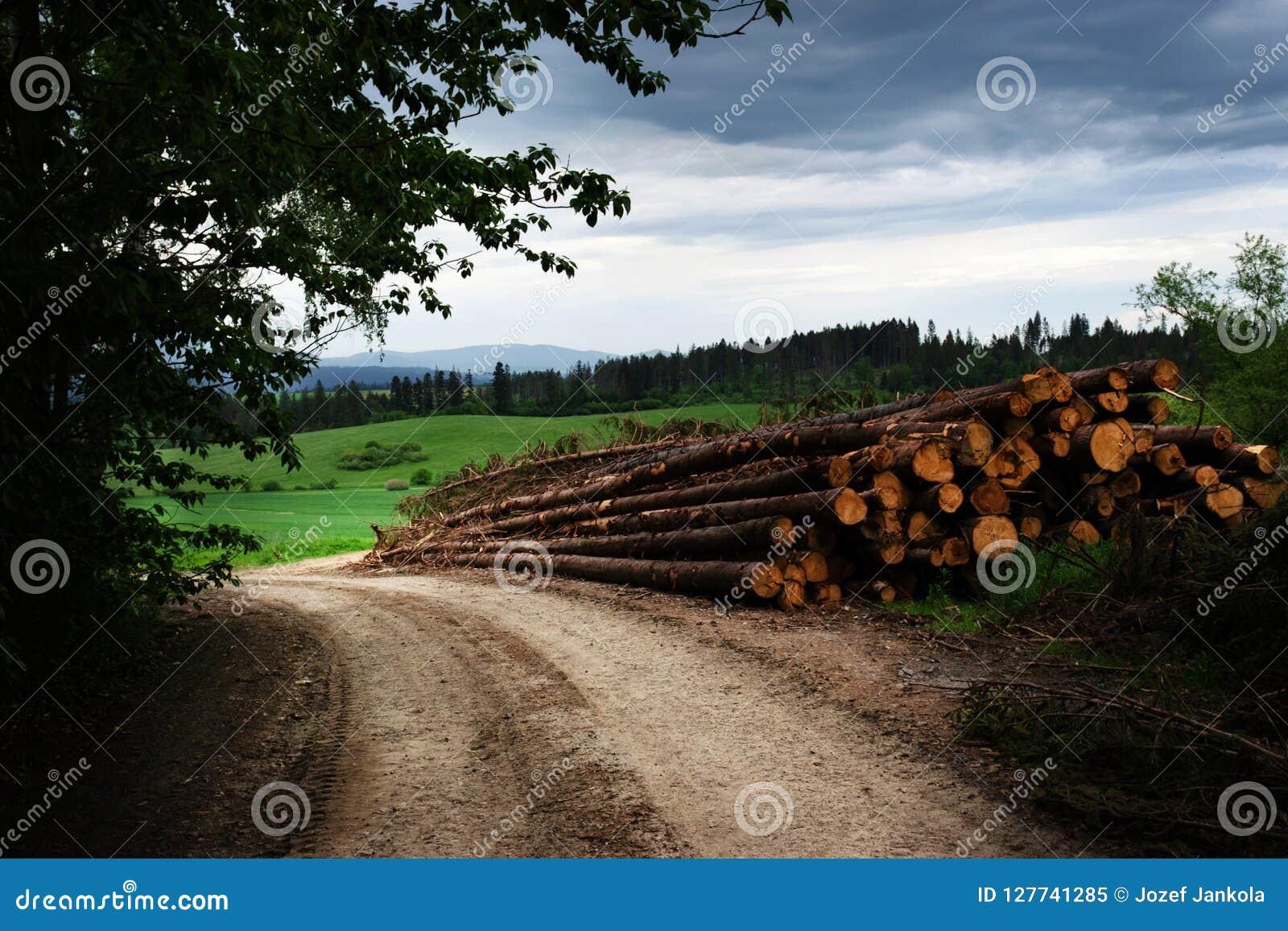 转储木在路边缘