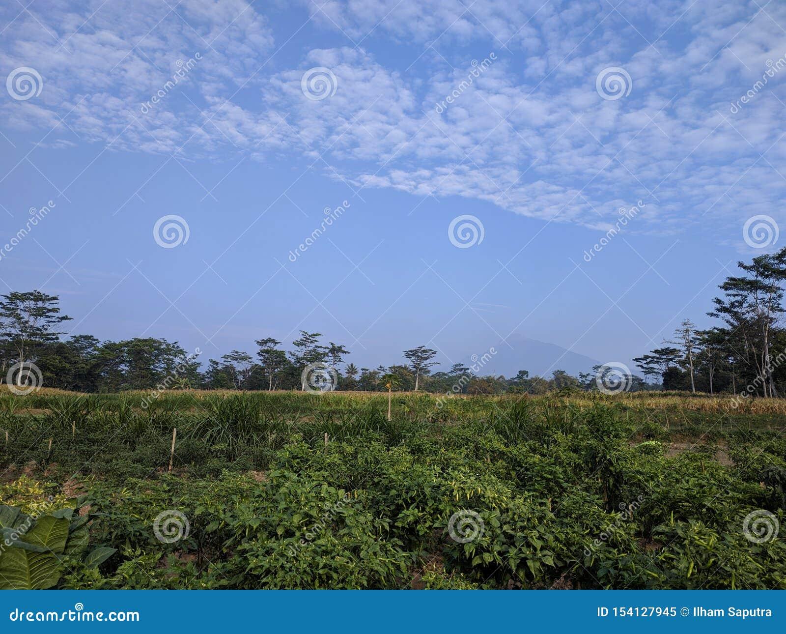 辣椒庭院和默拉皮山景
