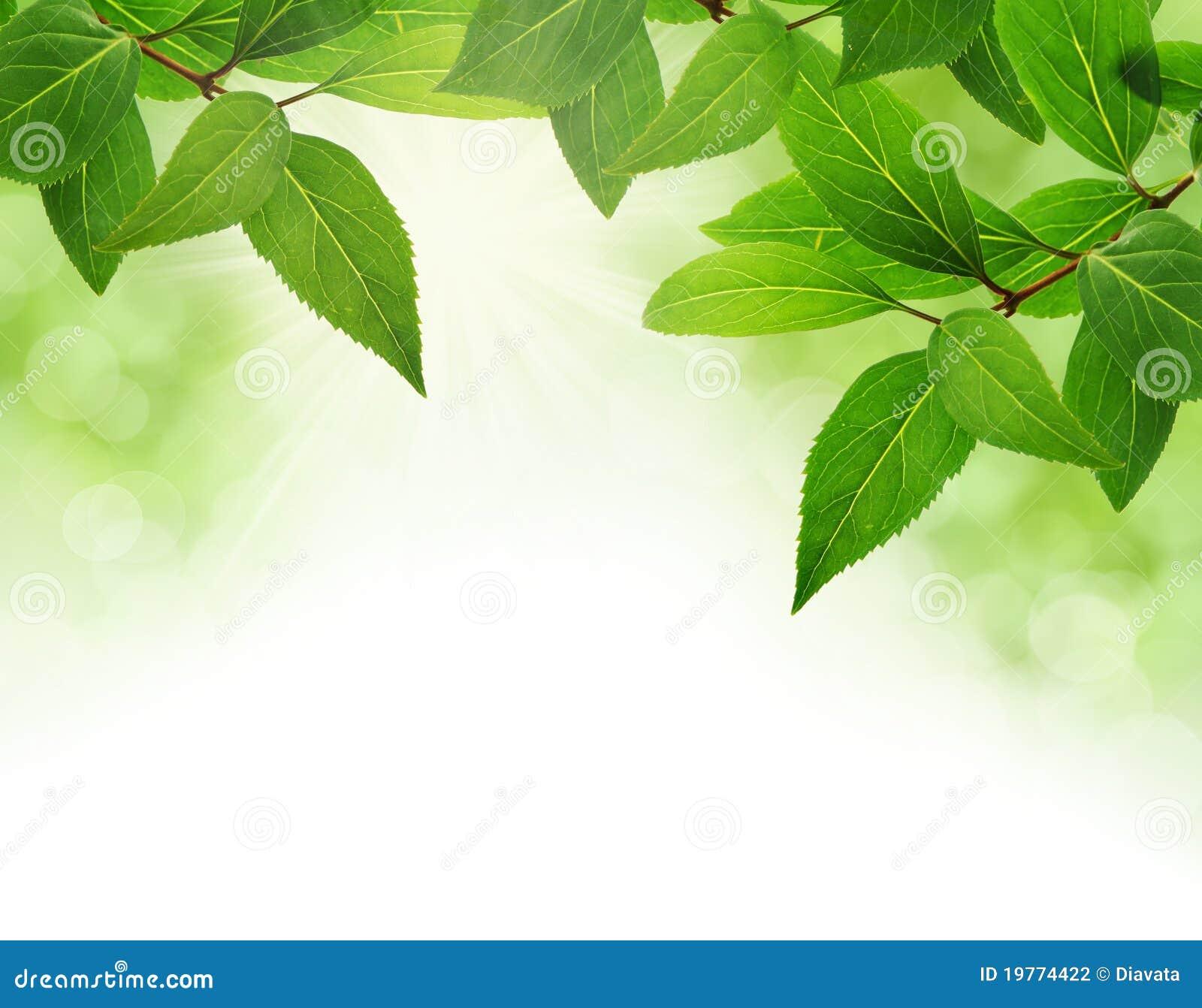 边界绿色叶子