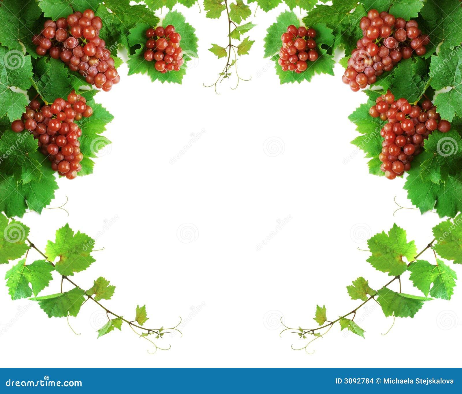 边界装饰葡萄树