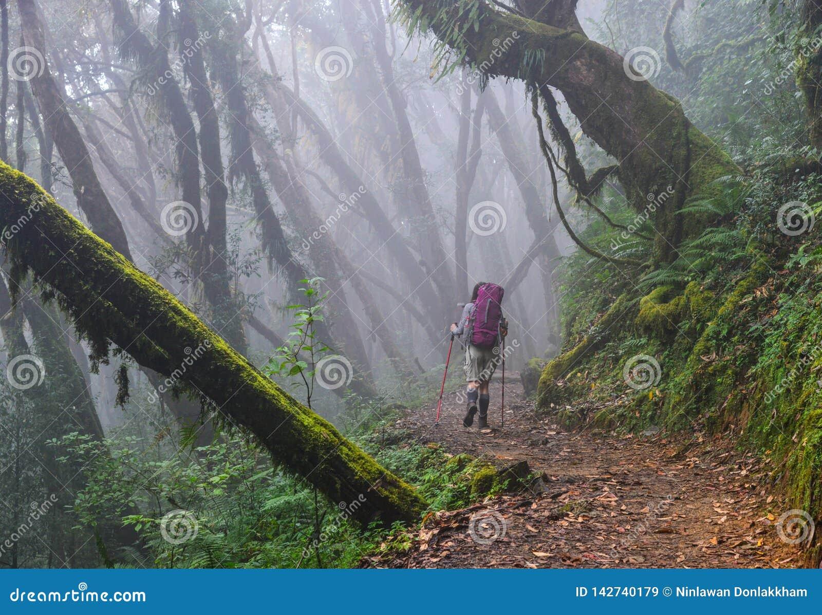 迁徙在森林里的人们