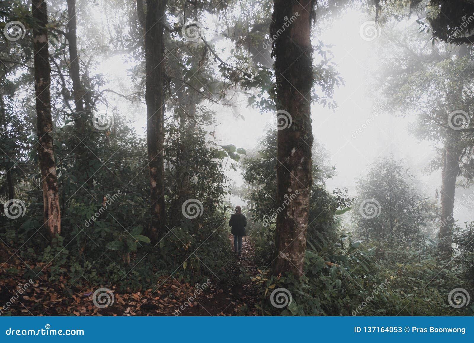 迁徙在雨林森林密林的妇女