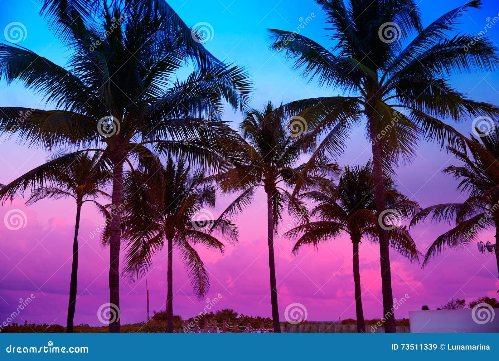迈阿密海滩南海滩日落棕榈树佛罗里达