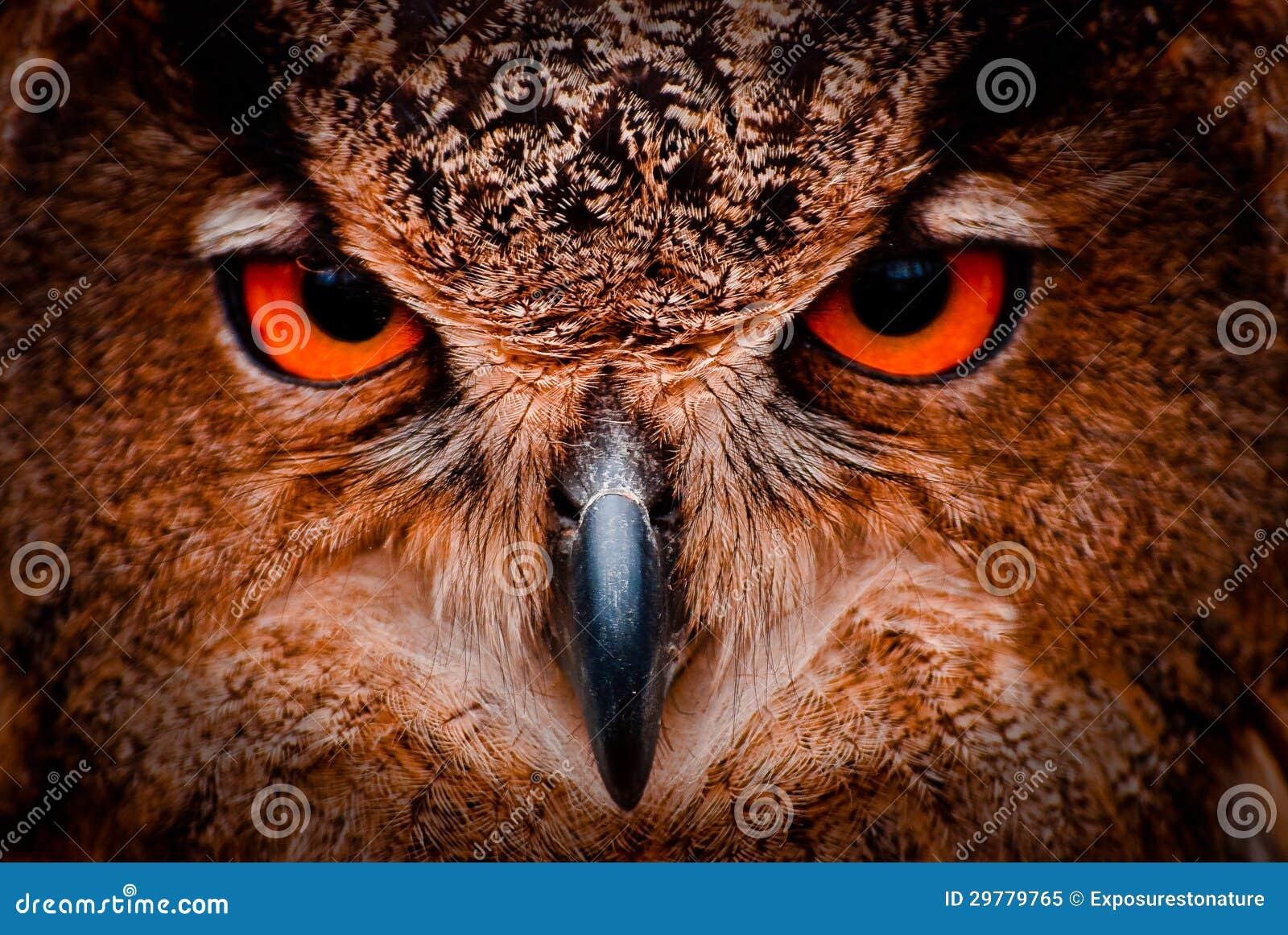 明智的老猫头鹰眼睛