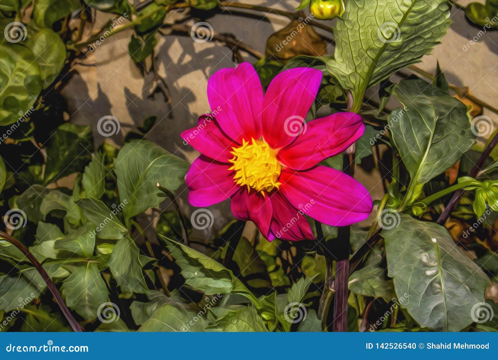 这张照片给了桃红色波斯菊花园做它的一个照片作用类似油画