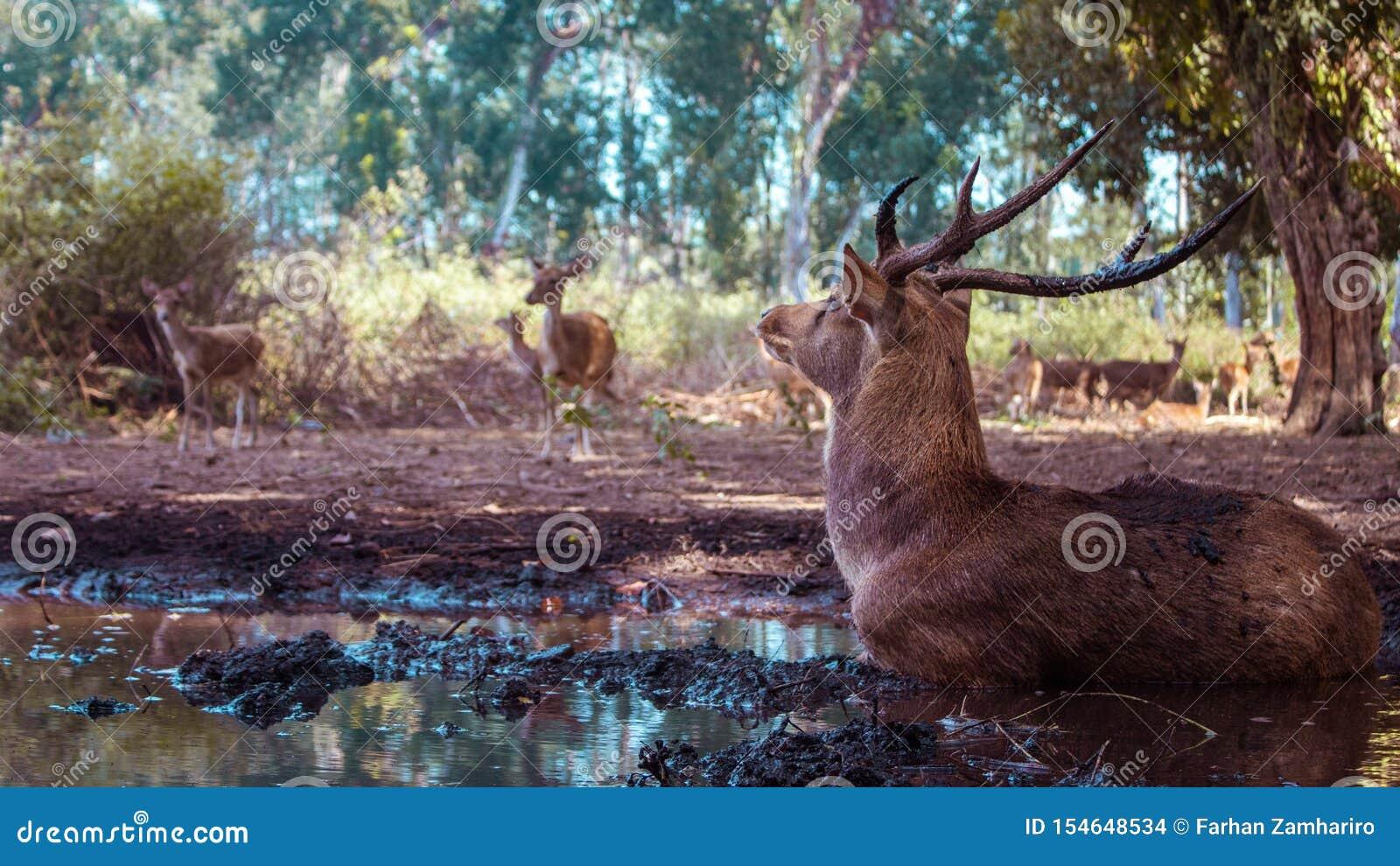 远离牧群的一头鹿