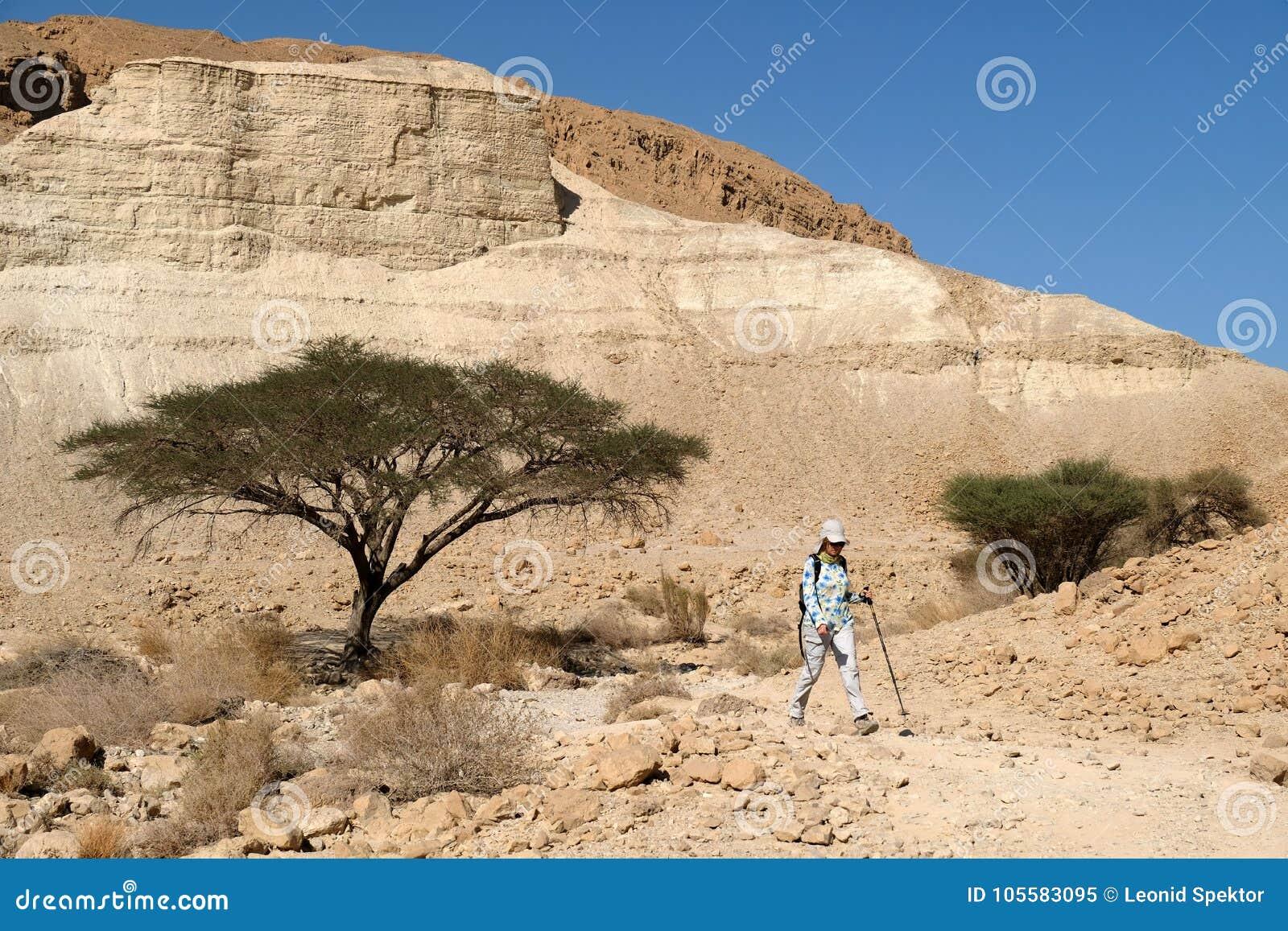 远足在犹太沙漠