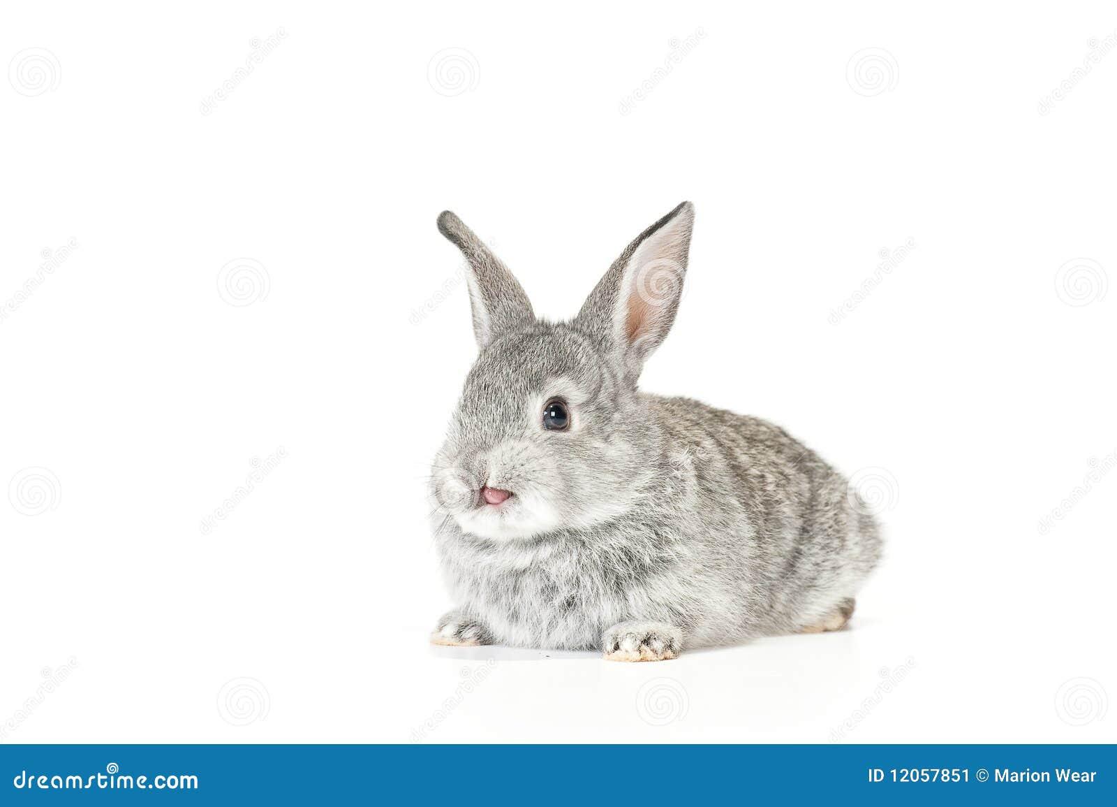 逗人喜爱婴孩的兔宝宝