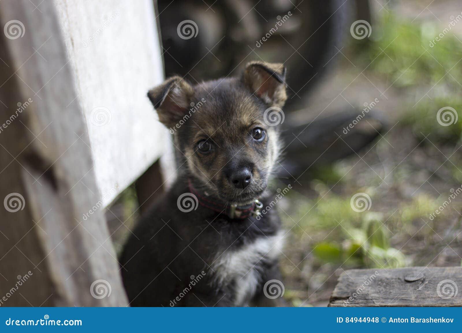 逗人喜爱的小狗看看您,乞求一些食物 在vill的饥饿的小犬座