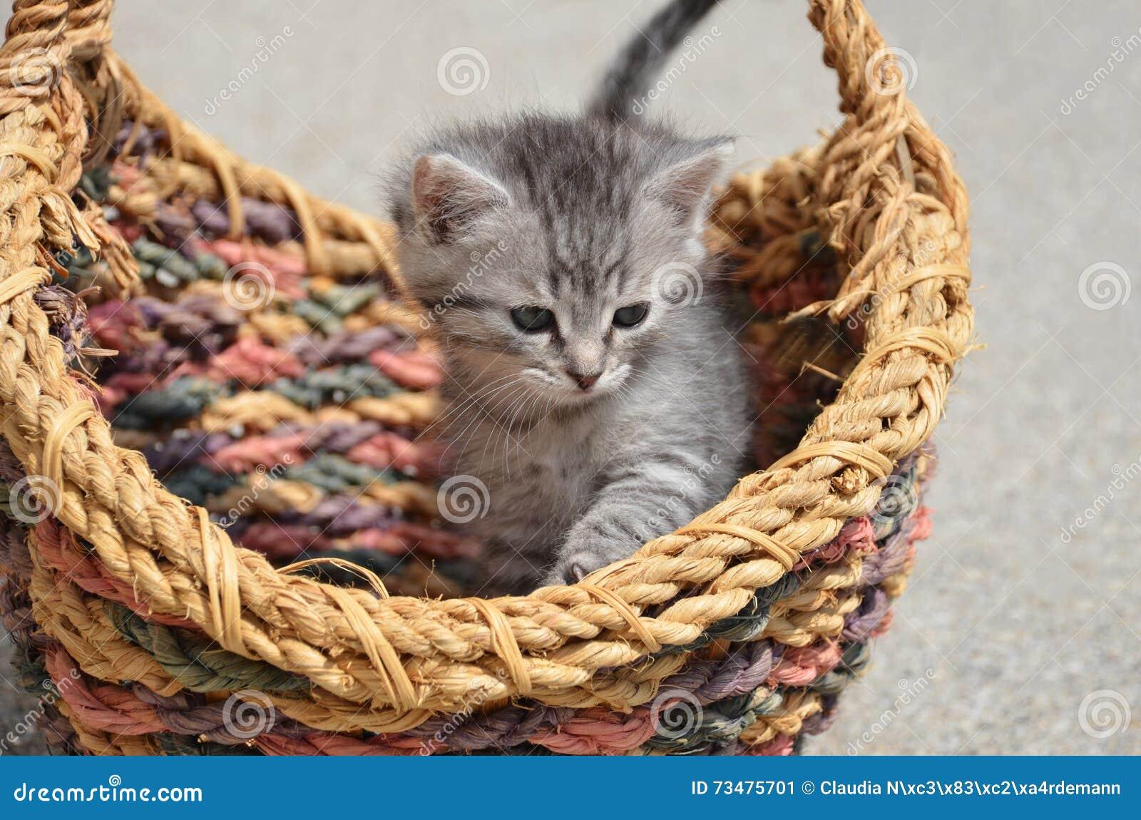 逗人喜爱的小猫