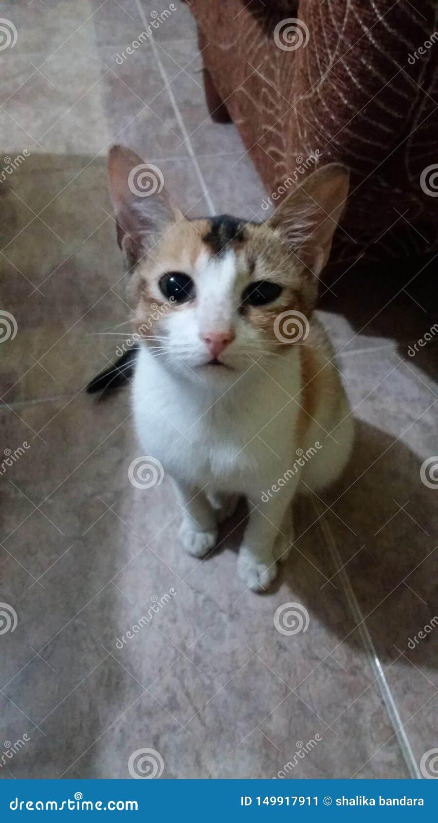 逗人喜爱的小的猫在家