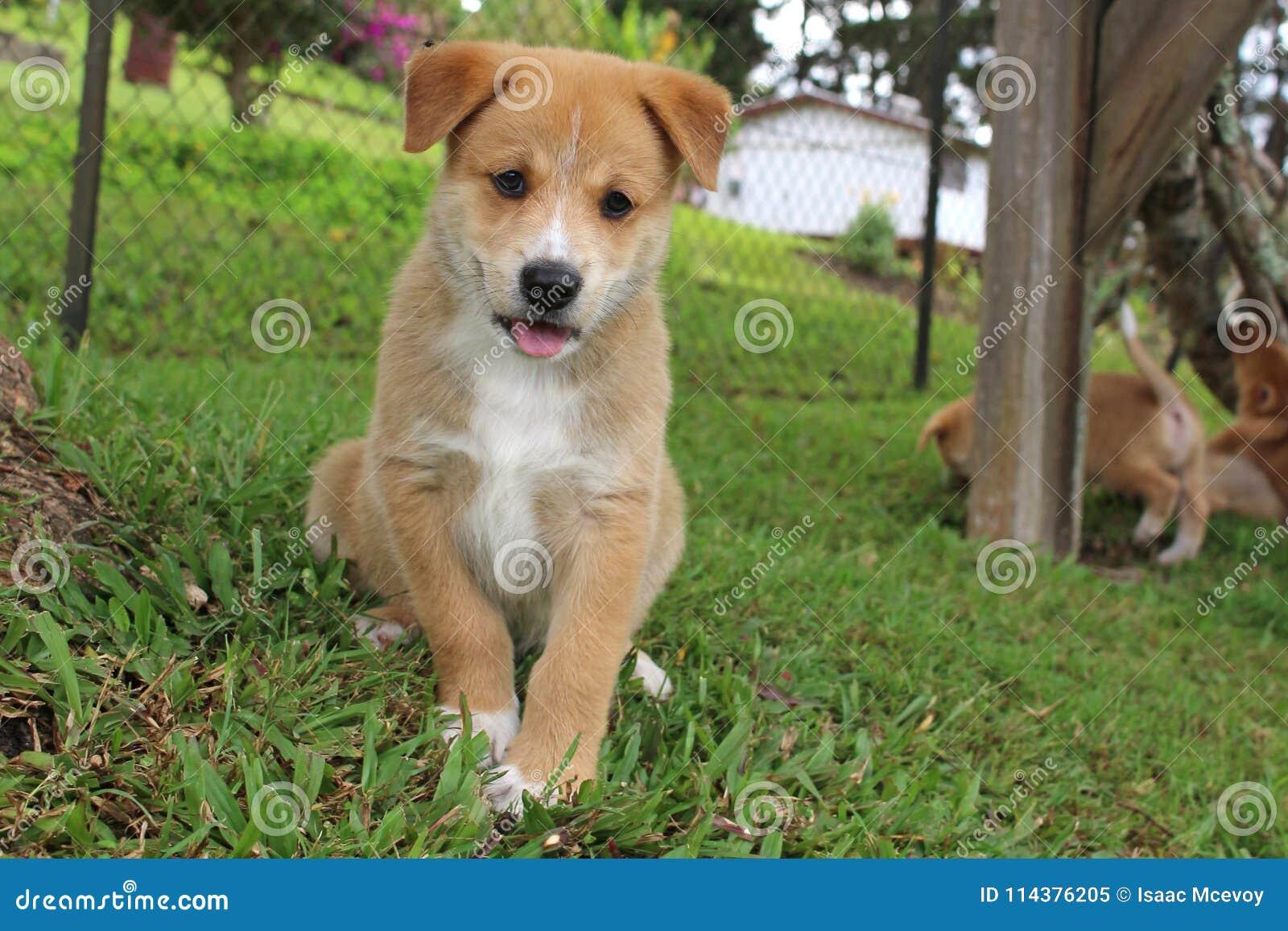 逗人喜爱的棕色小狗开会