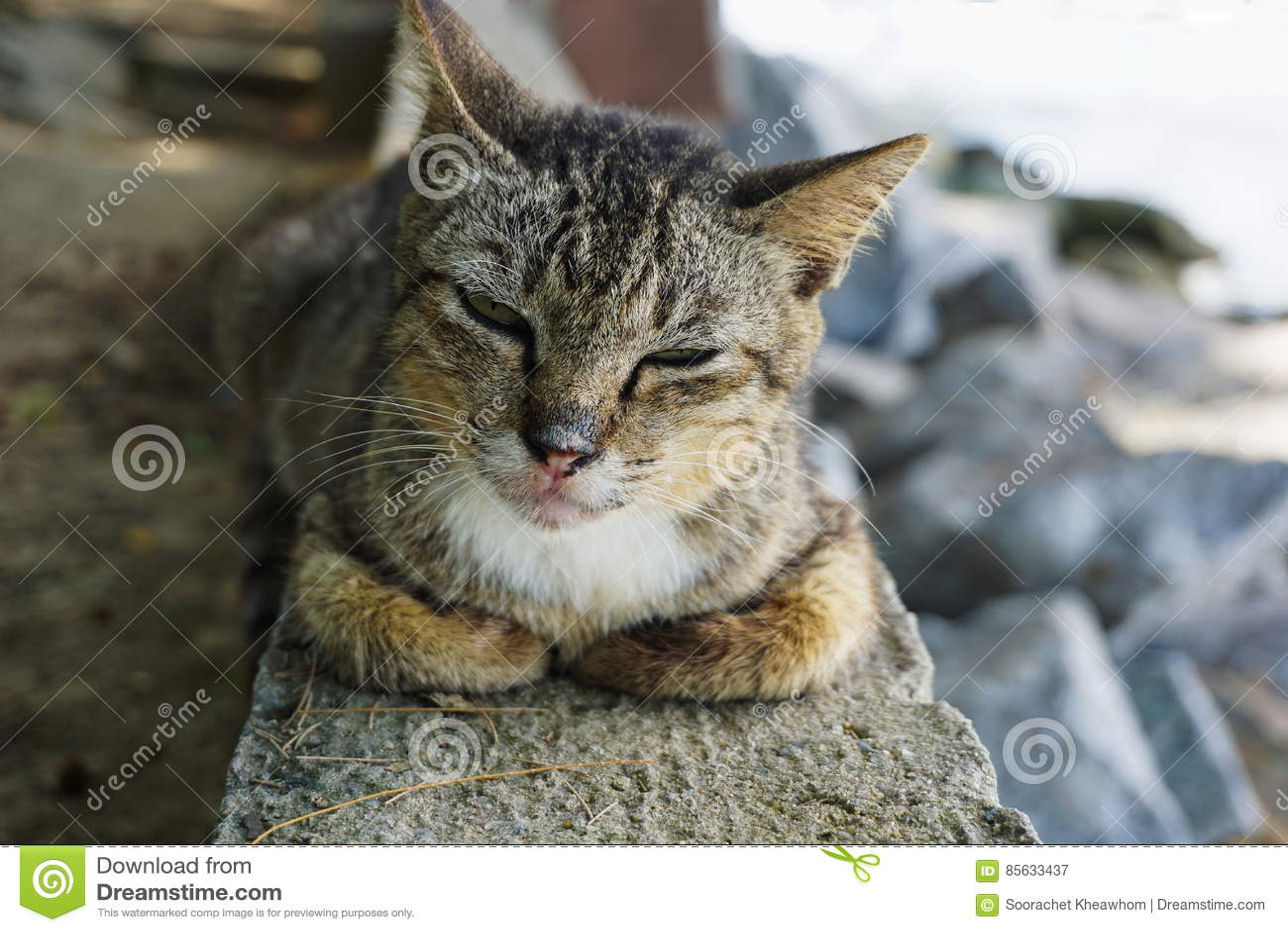 逗人喜爱的猫享有他的生活