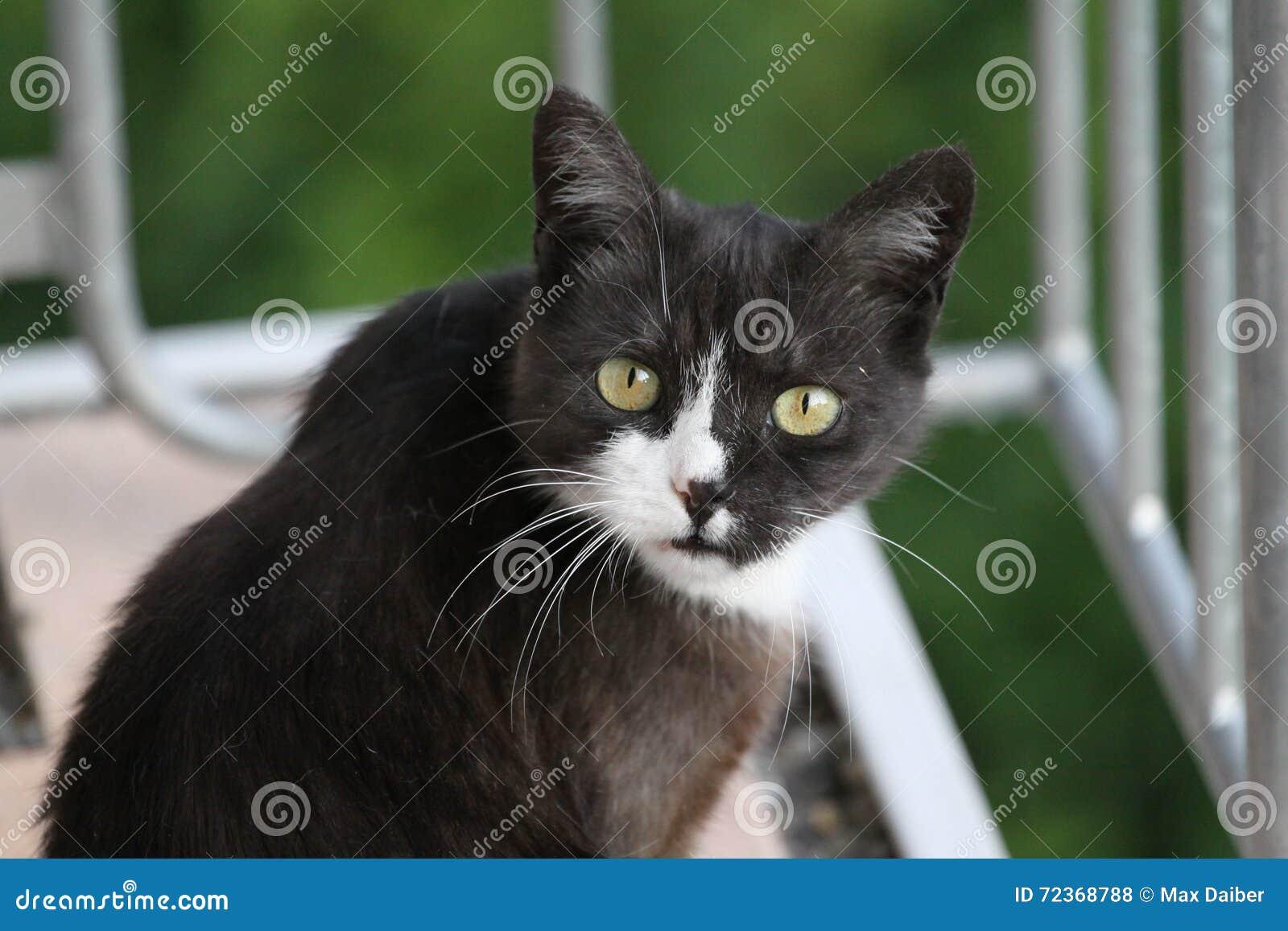 逗人喜爱的猫问什么您要
