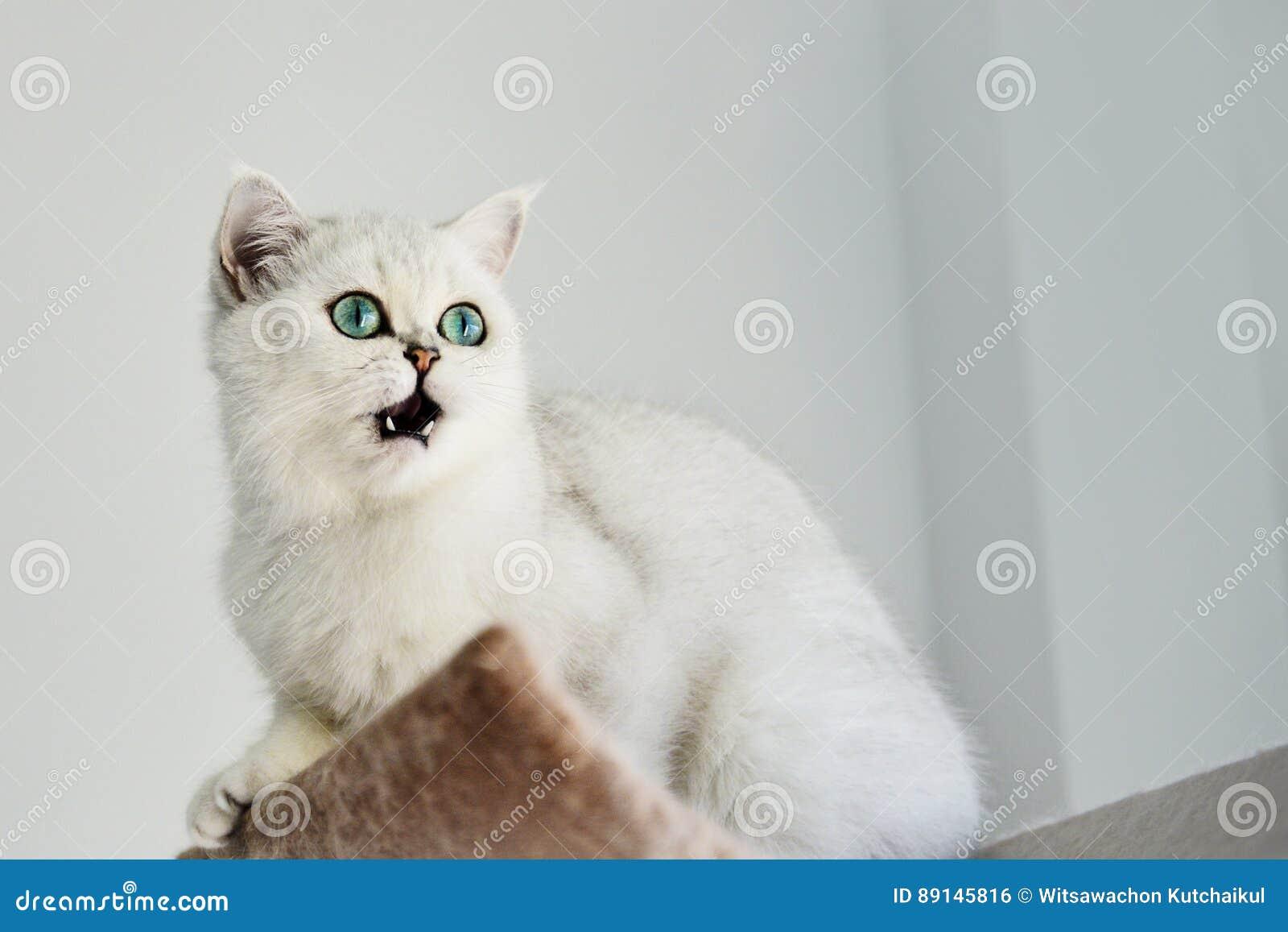 逗人喜爱的猫