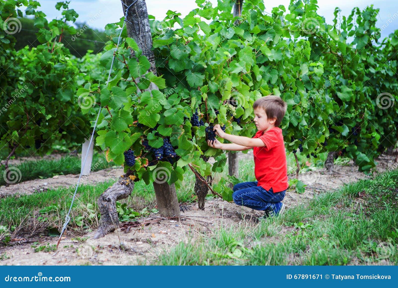 逗人喜爱的笑的男孩,跑在一个美好的夏天藤围场