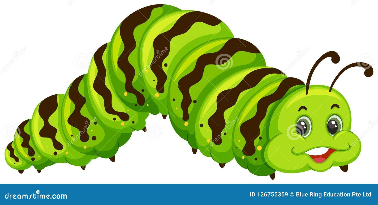 逗人喜爱的绿色毛虫动画片